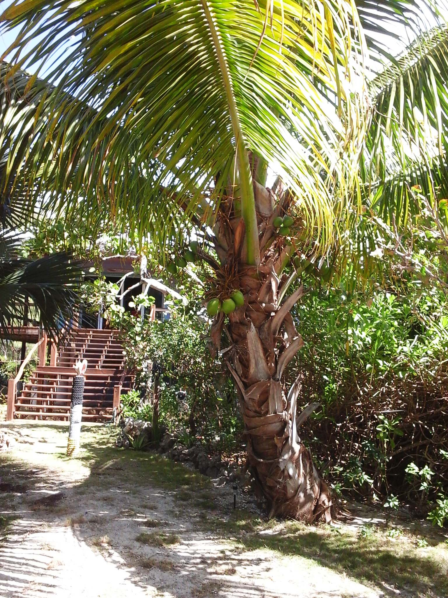 Additional photo for property listing at Plum Crazy Green Turtle Cay, Abaco Bahamas