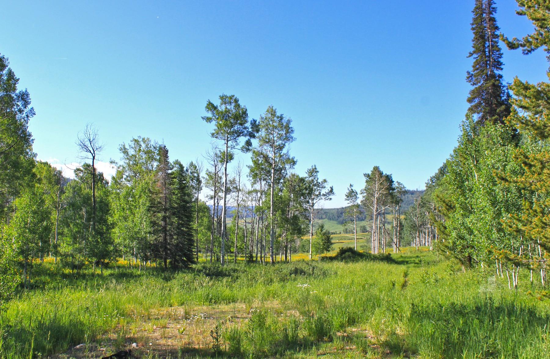 Land for Sale at Elkhorn Lot 11 26655 Westlake Dr. Clark, Colorado, 80428 United States