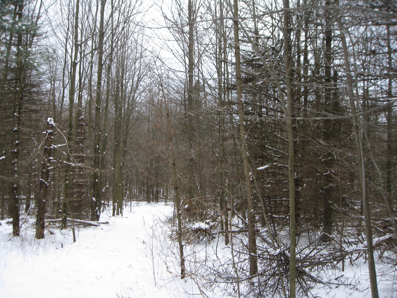 Đất đai vì Bán tại Building Parcel - Close Proximity To Town A 62nd Street Holland, Michigan, 49423 Hoa Kỳ