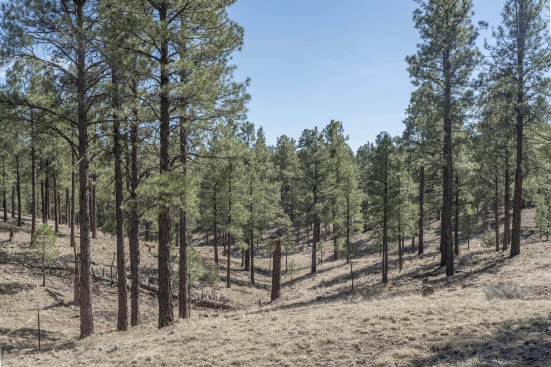 Land for Sale at Highly sought after community of Pine Canyon 2431 E Del Rae Dr #181 Flagstaff, Arizona, 86001 United States