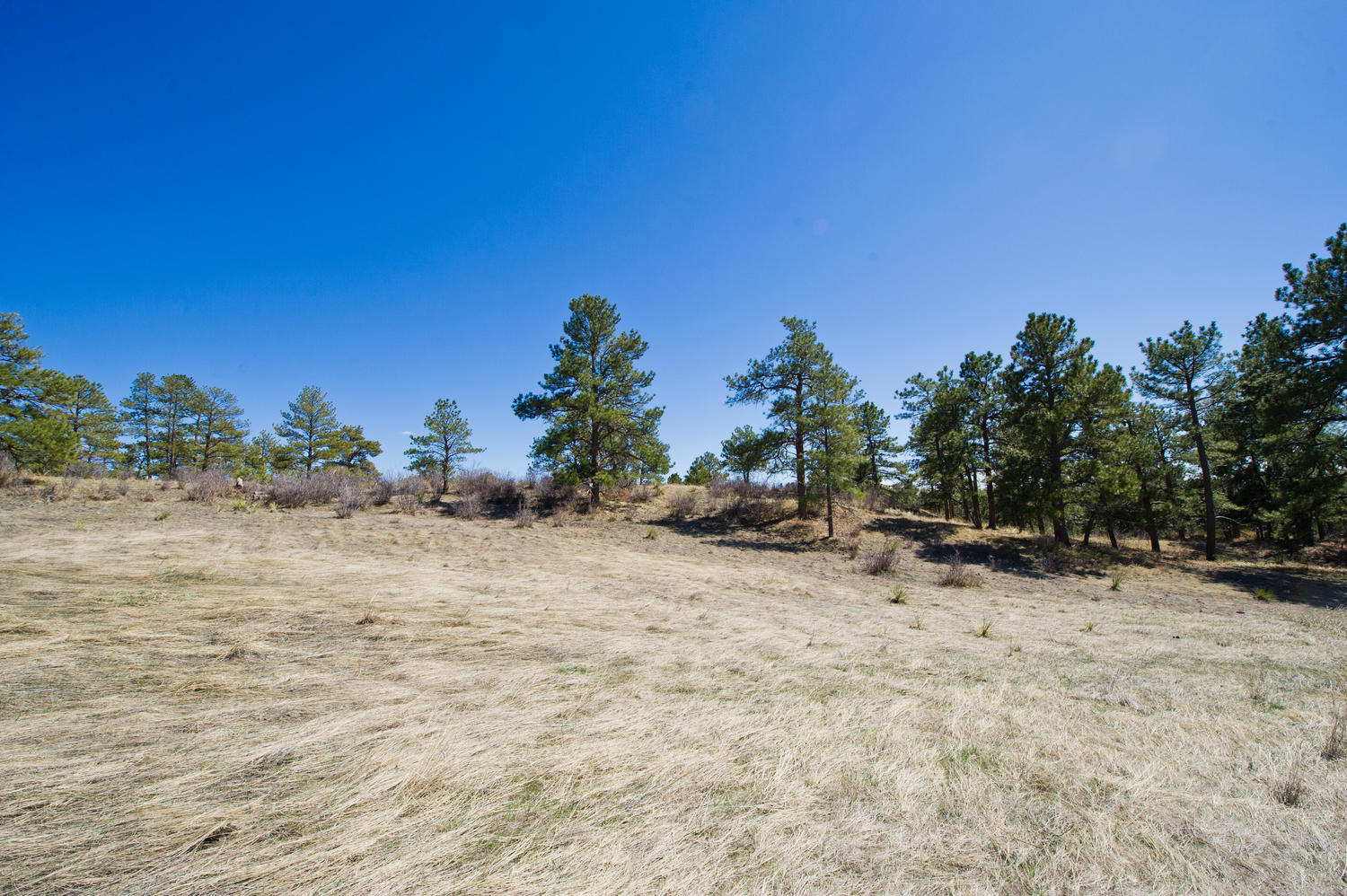 Land for Sale at Your dream home begins with a dream site 7916 Forest Keep Cir Parker, Colorado, 80134 United States