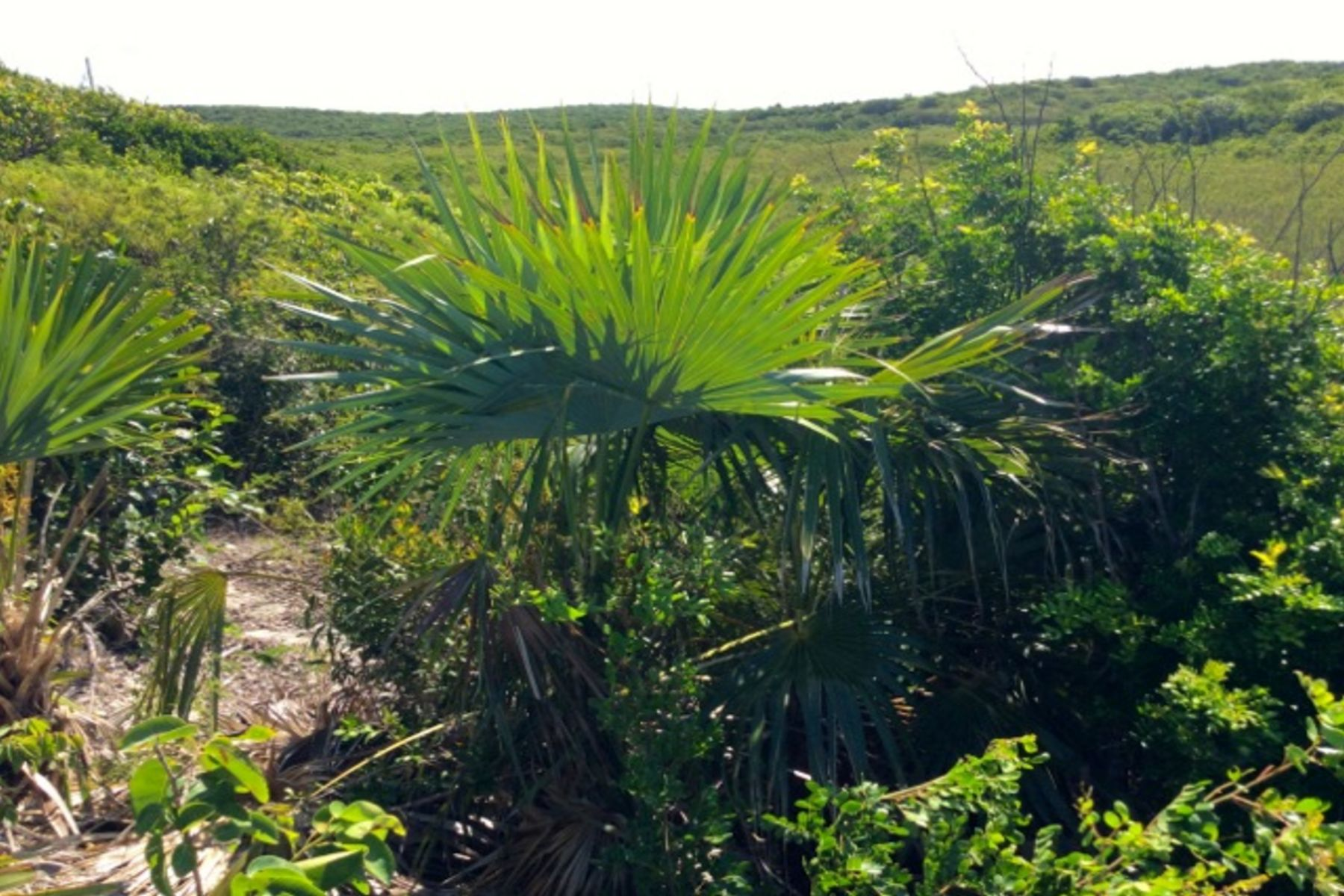 Additional photo for property listing at Cliff Top Parcel Commands Views of the Caribbean Coastline Gregory Town, Eleuthera Bahamas