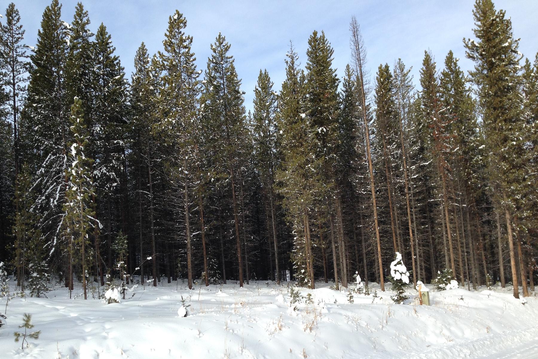 土地 为 销售 在 Aspen Groves Subdivision Lot 35 Silverado Trail Big Sky, 蒙大拿州 59716 美国