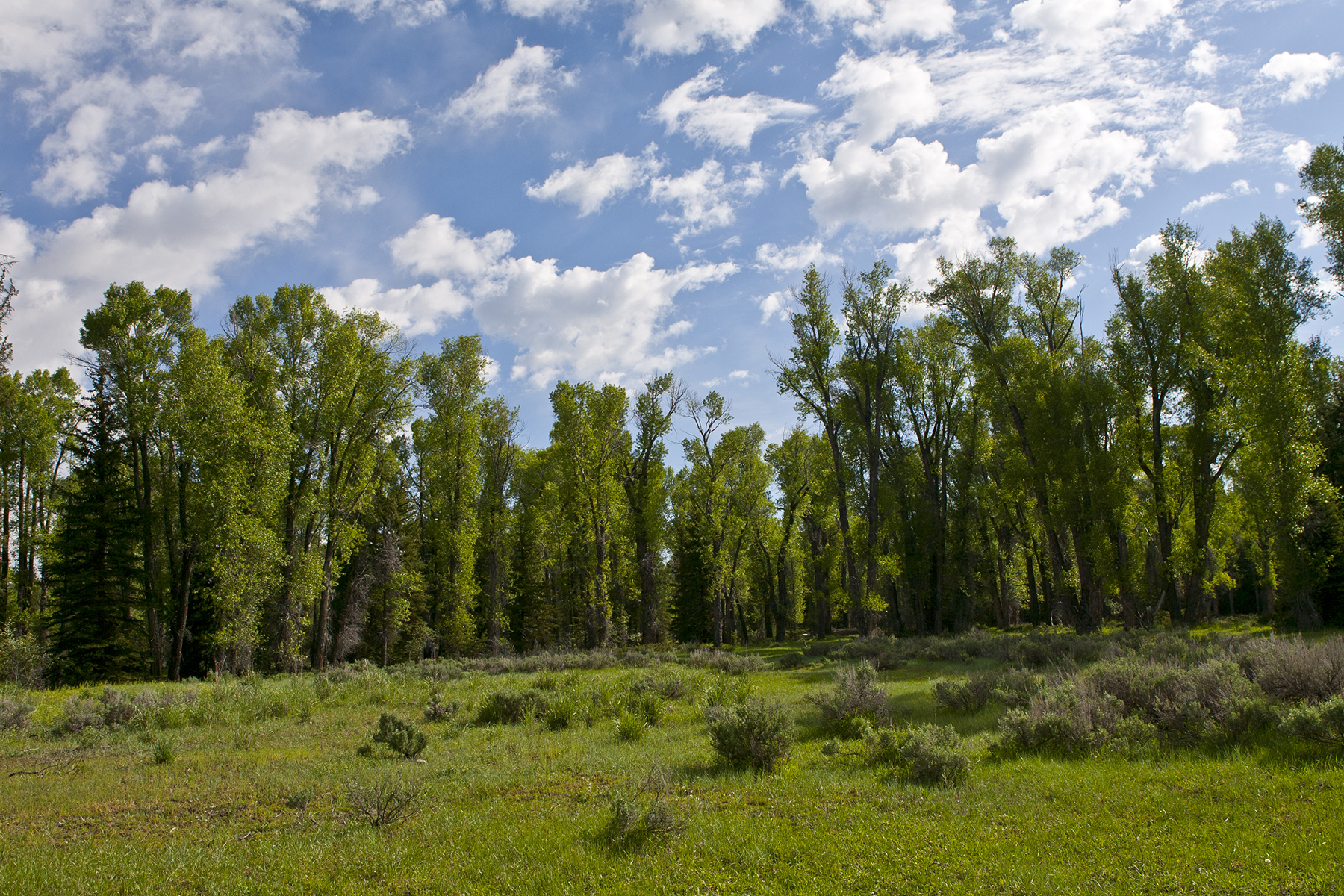 Property Of More Than 70 Acres on the Snake River
