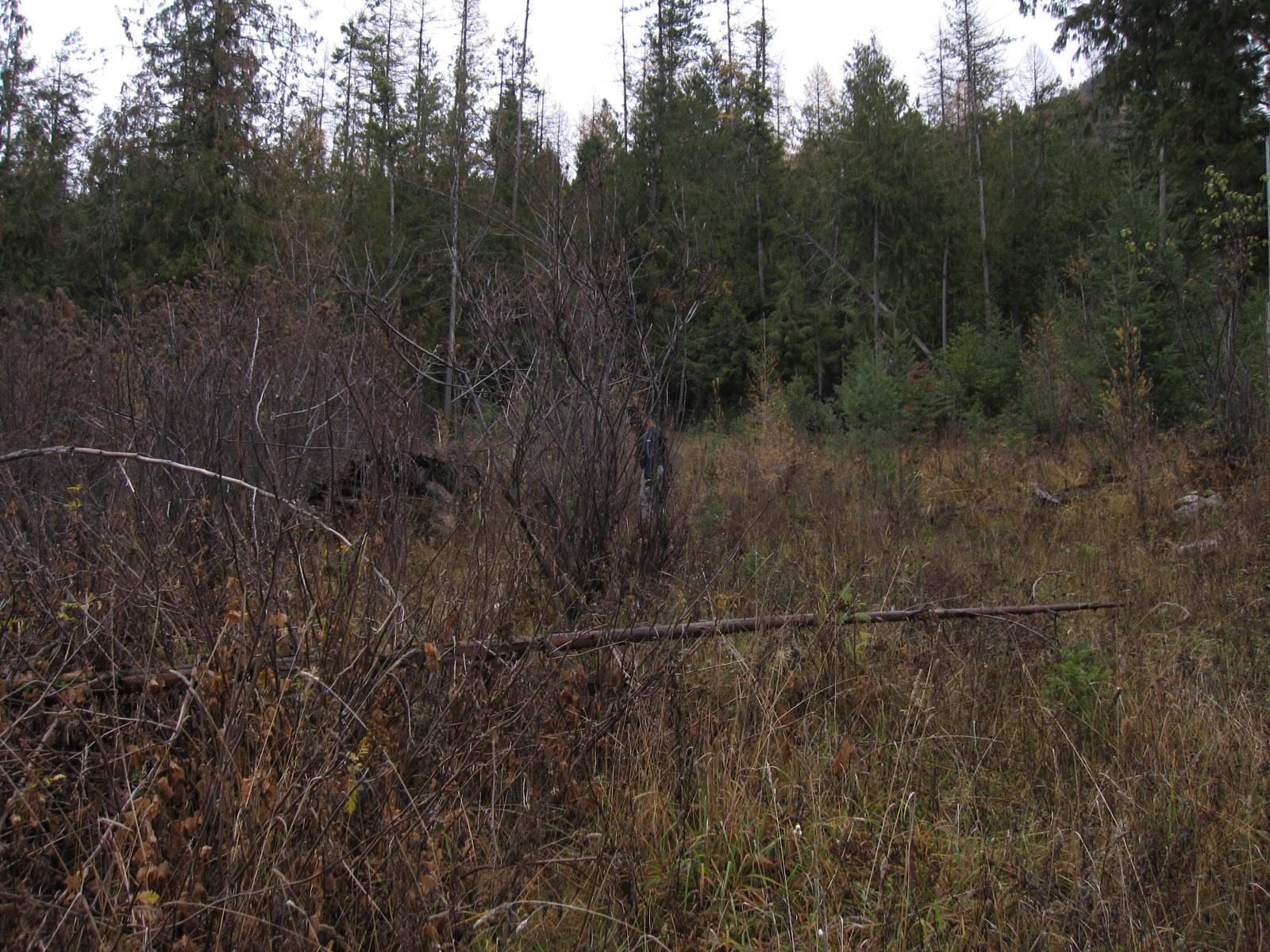 Terreno per Vendita alle ore Four lots bordering Forest Service with a small view of Lake Pend Oreille B3 L1-4 Pend Oreille Ave Bayview, Idaho, 83803 Stati Uniti