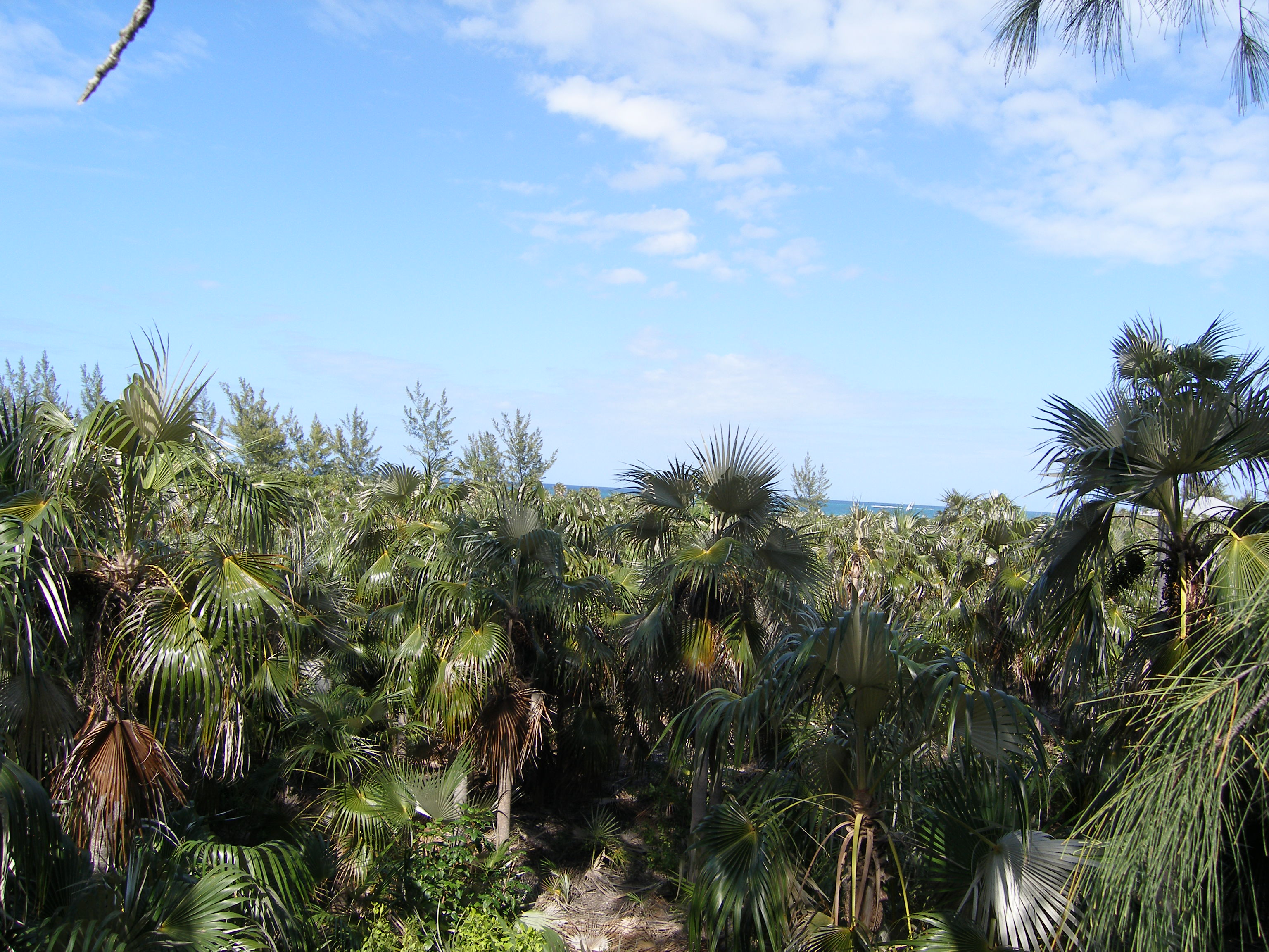 Additional photo for property listing at Prime Bank's Road Beachfront Governors Harbour, Eleuthera Bahamas