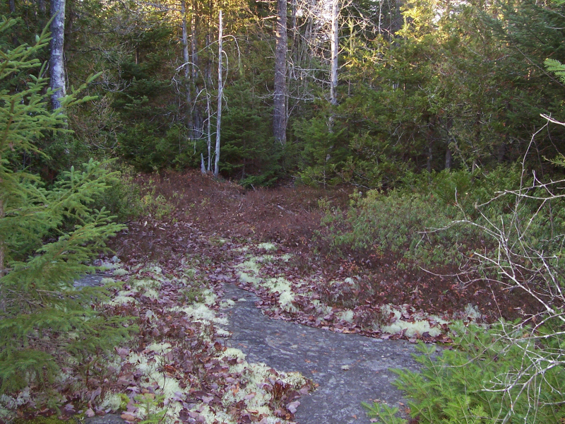 Land for Sale at Hidden Woods 0 West Bay Road Gouldsboro, Maine, 04607 United States