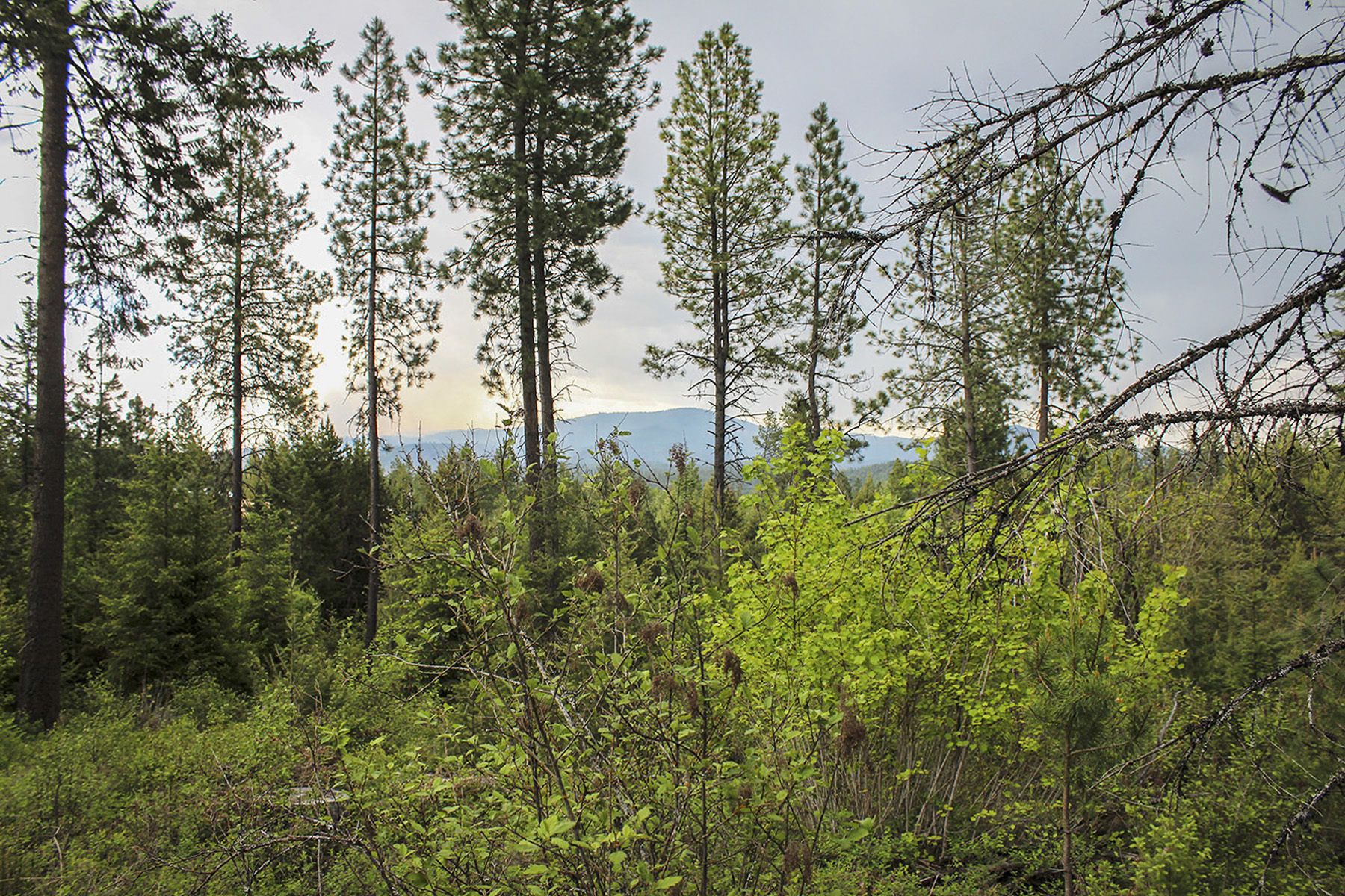 Terrain pour l Vente à Treed home site with end of the road privacy Everett Huff Lot 1 Oldtown, Idaho, 83822 États-Unis