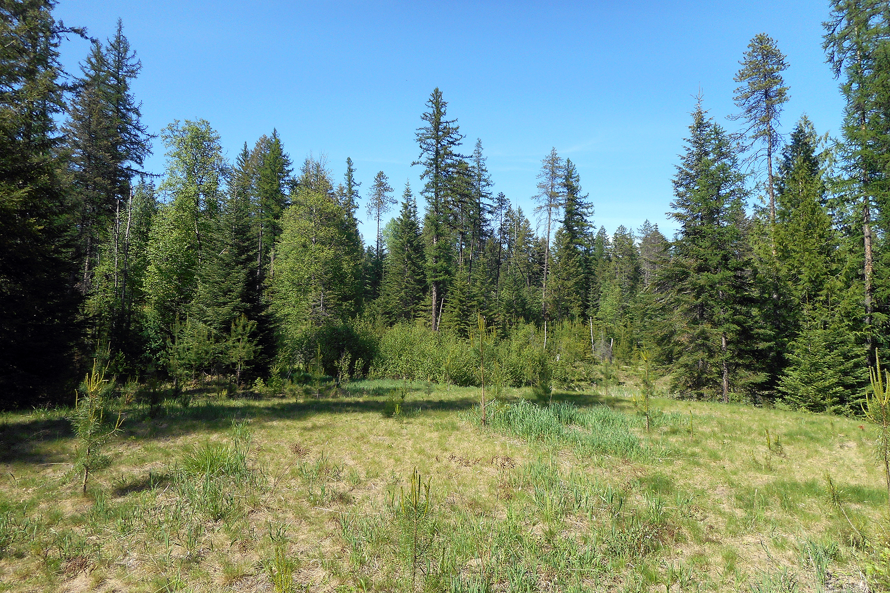 sales property at 4.7 forested acres bordering State Land