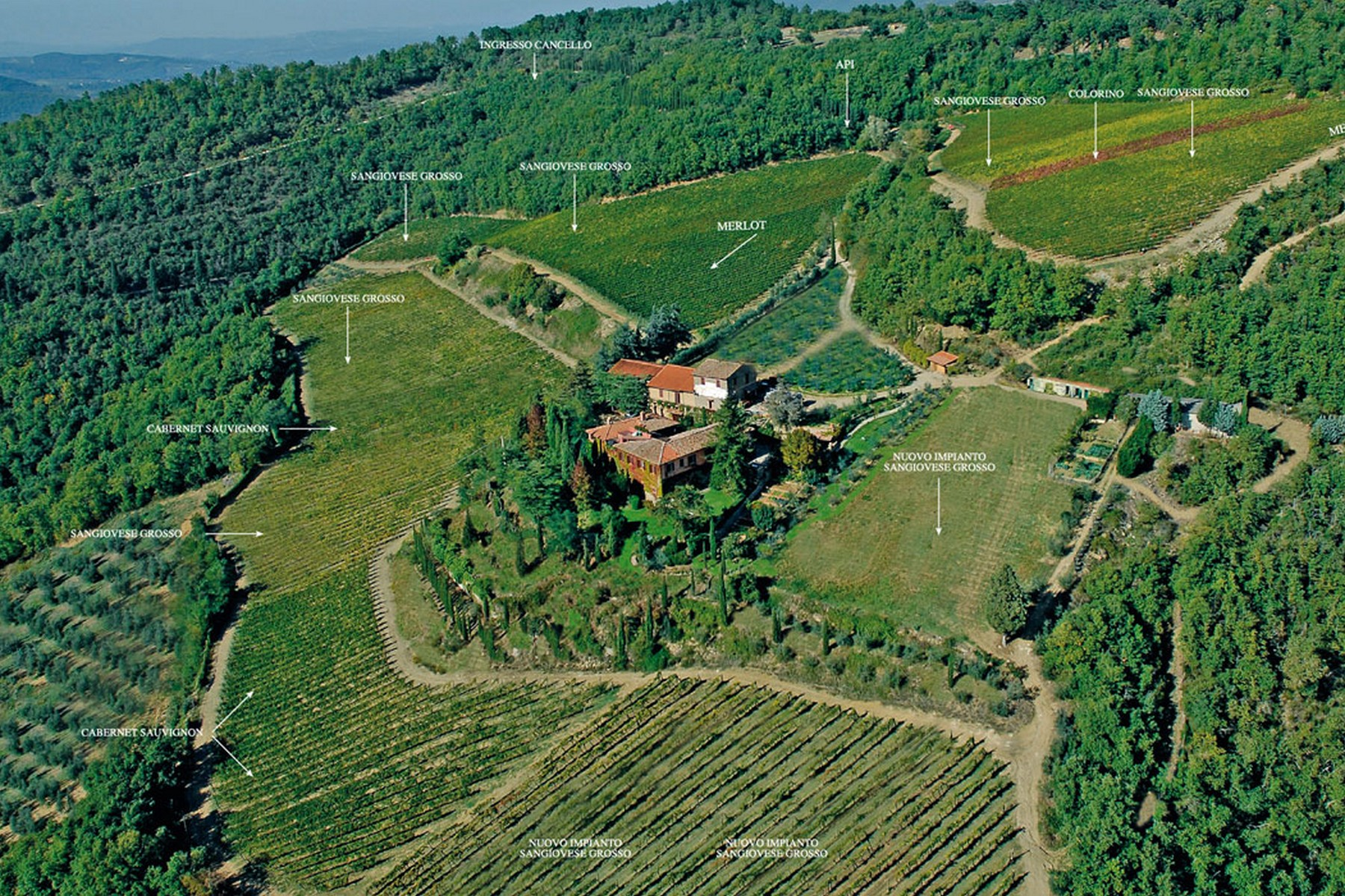 Single Family Home for Sale at Chianti vineyard and villa Via San Leonino Panzano In Chianti, Florence, 50022 Tuscany, Italy