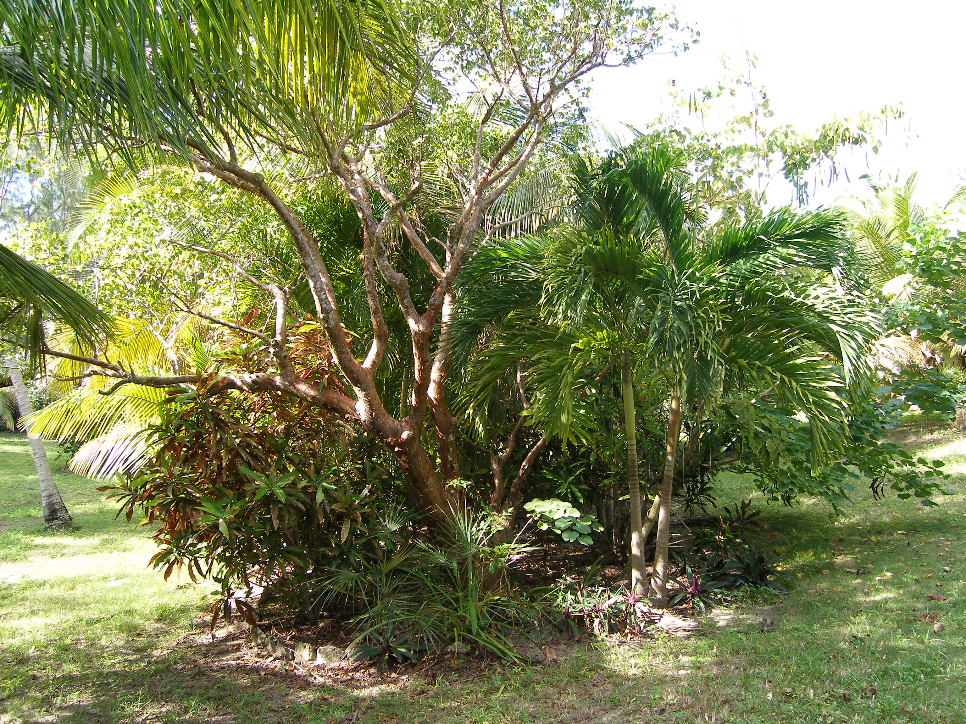 Additional photo for property listing at HEAVEN IS A LITTLE CLOSER IN A HOUSE BY THE SEA Palmetto Point, Eleuthera Bahamas
