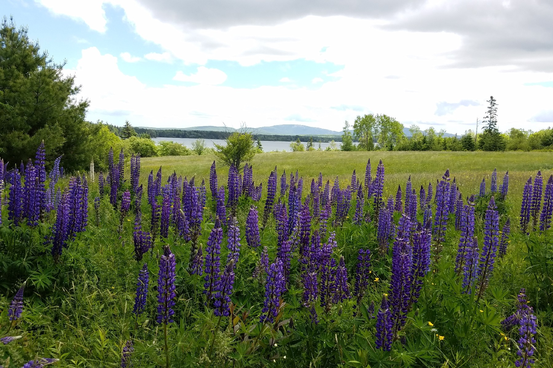 Land for Sale at Oak Point 0 Oak Point Road Trenton, Maine, 04605 United States