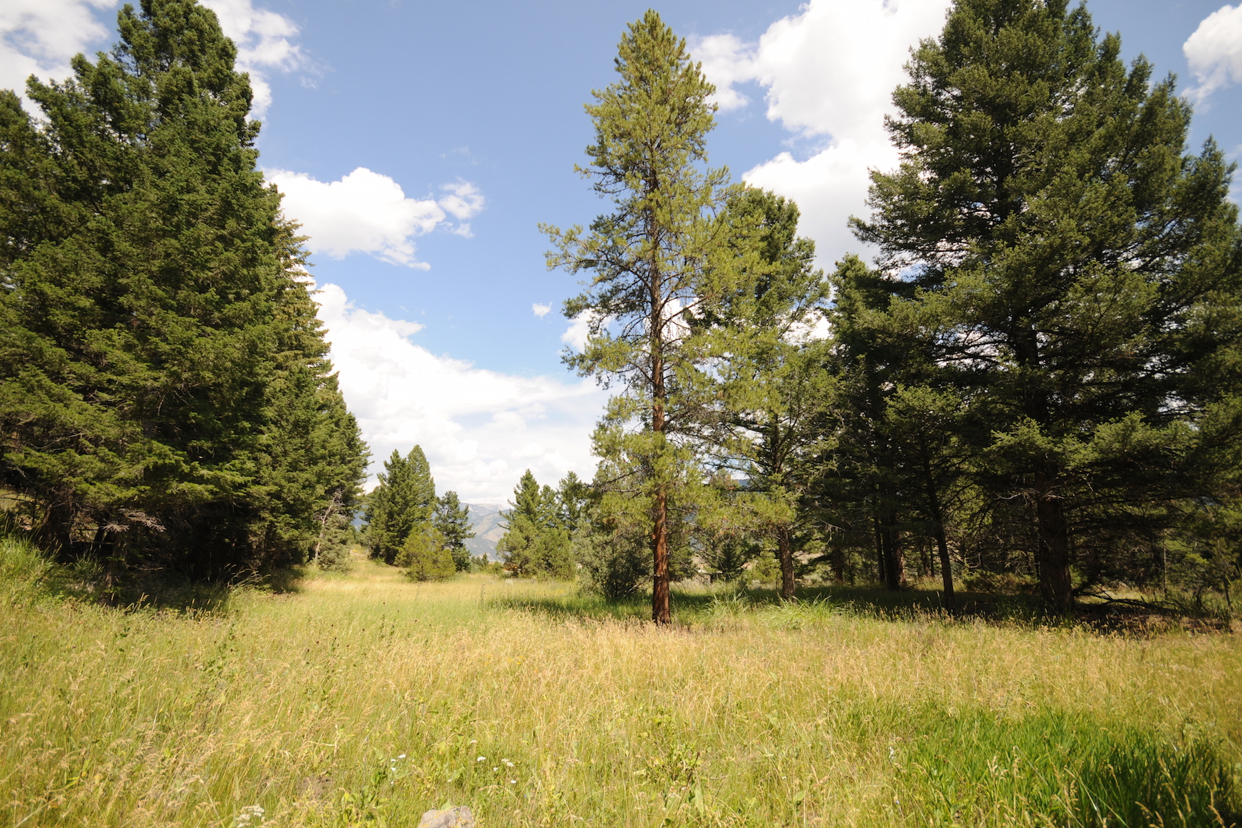 Terreno per Vendita alle ore Private Canyon Acreage Twin Antler Big Sky, Montana 59716 Stati Uniti