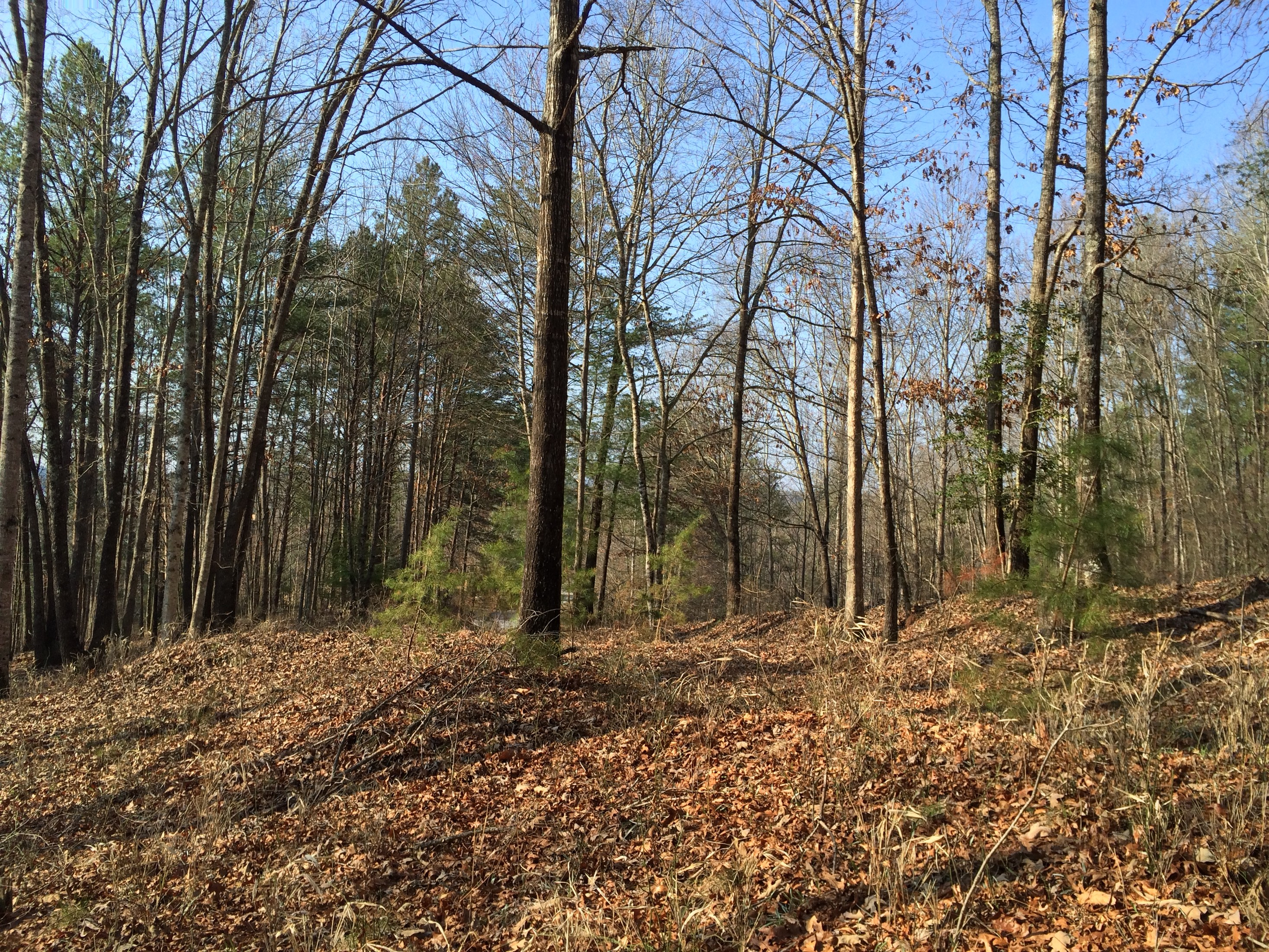 Land for Sale at A Short Walk to the Clubhouse W41 Sunset, South Carolina, 29685 United States