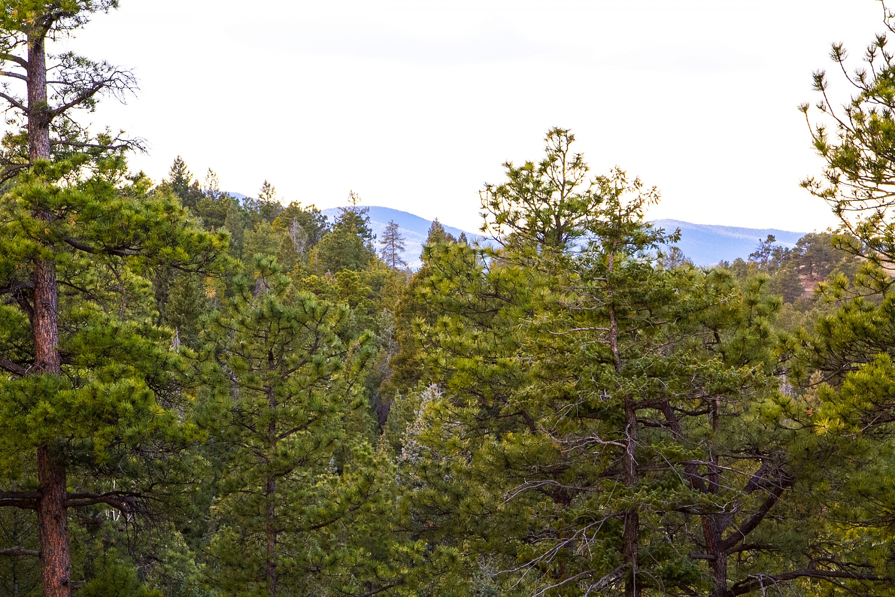 地產 為 出售 在 A Peaceful Blend of Old and New Forest N Turkey Creek Road Lot 16 Evergreen, 科羅拉多州 80439 美國