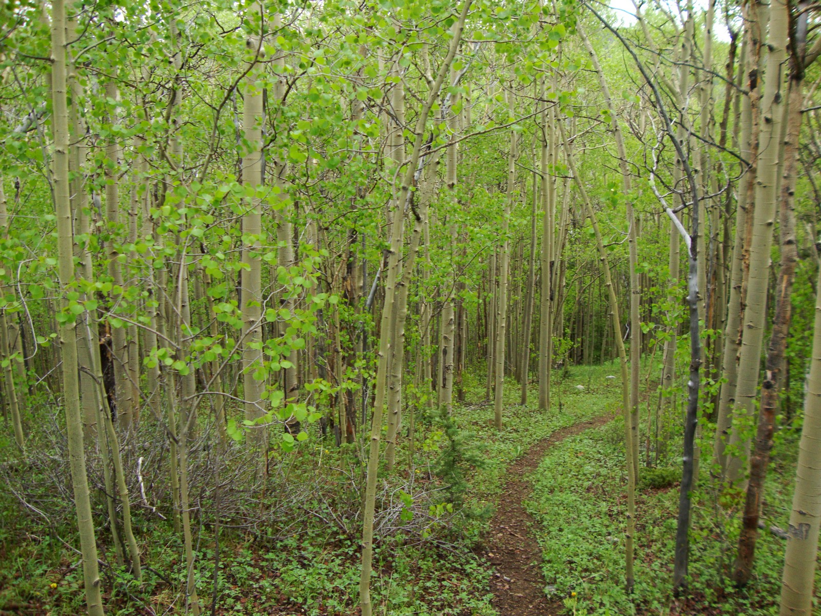 Land for Sale at 131 Aspen Way Alma, Colorado, 80420 United States