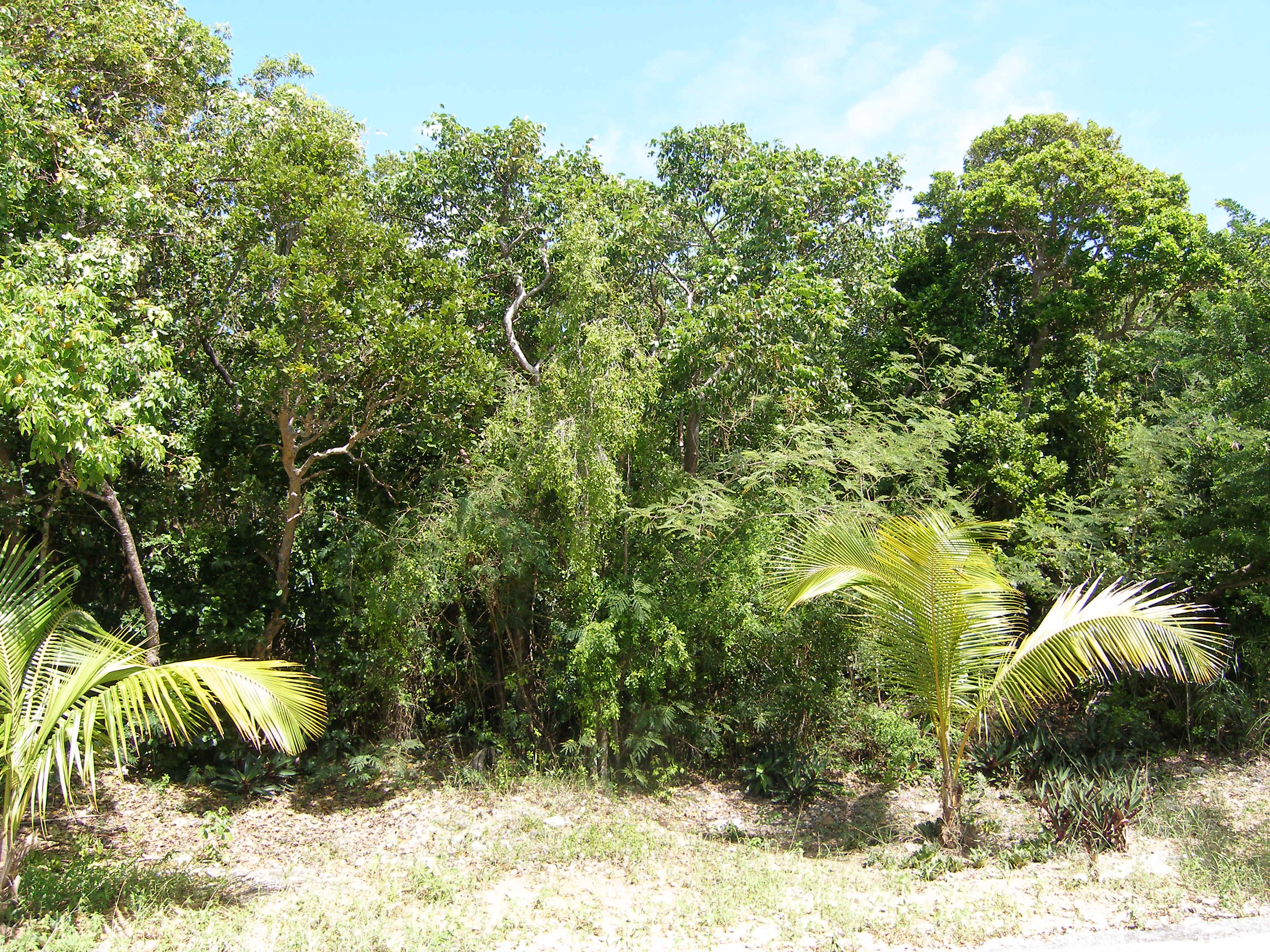 Additional photo for property listing at Palmetto Shores Lot 帕尔梅托, 伊路瑟拉 巴哈马