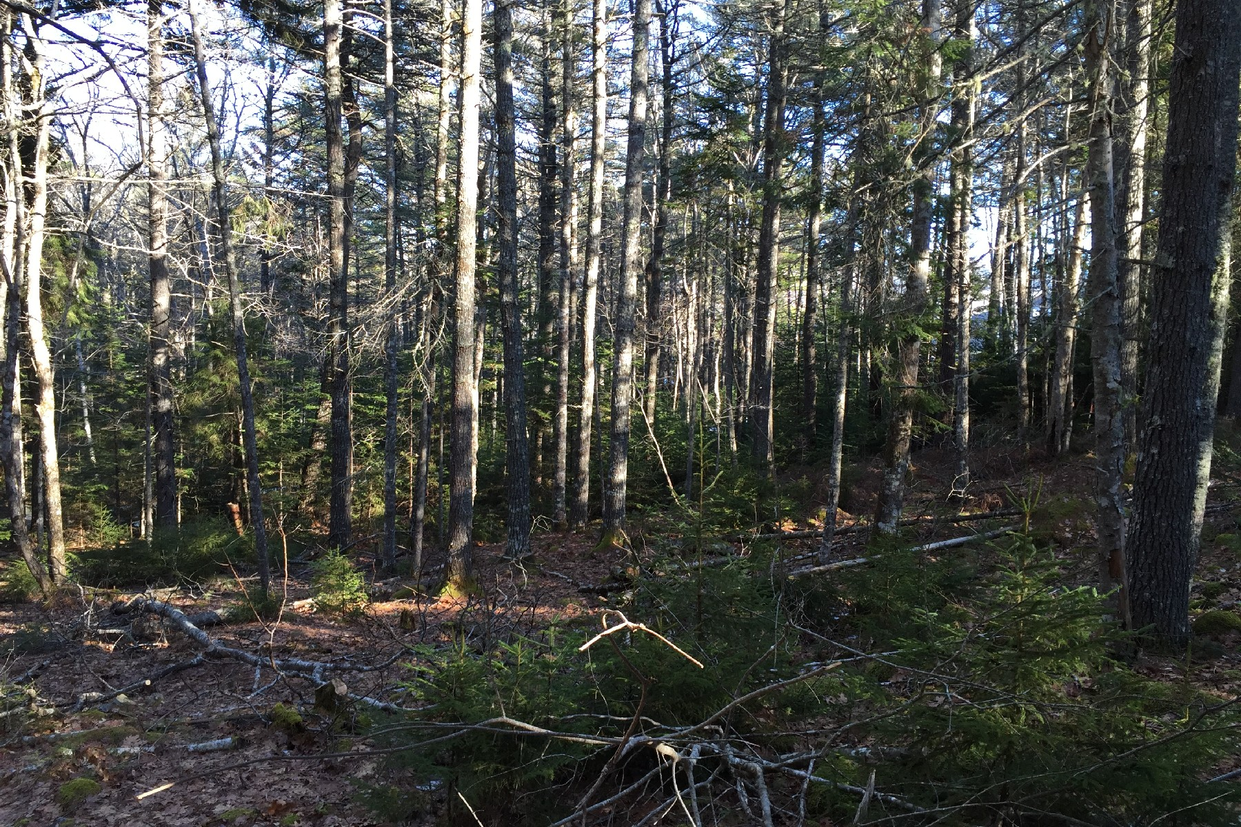 Land for Sale at Parker Farm Road 0 Parker Farm Road Mount Desert, Maine, 04660 United States