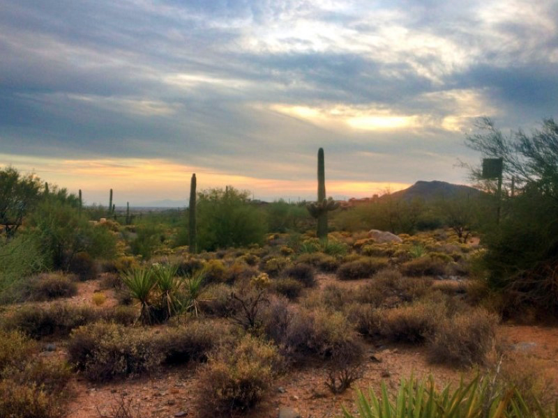 地產 為 出售 在 Non-membership Homesite in Desert Mountain's Premier Village of Saguaro Forest 41615 N 102nd Way #10 Scottsdale, 亞利桑那州 85262 美國