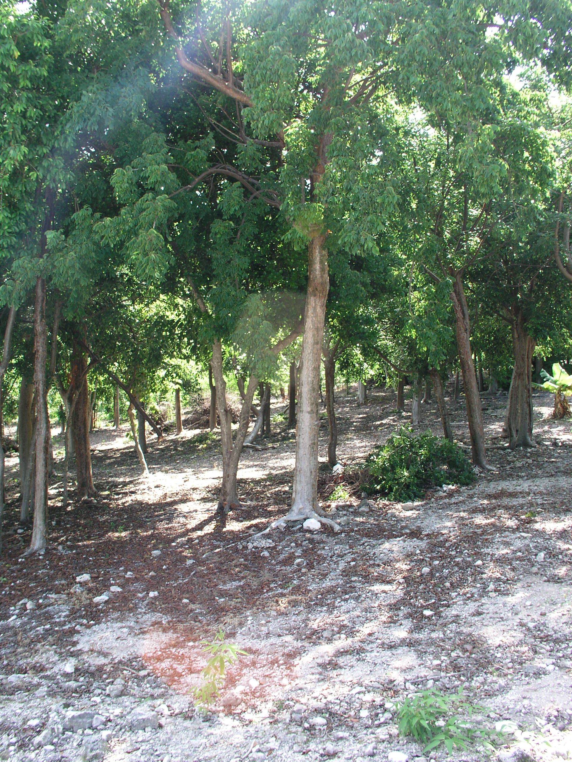 Additional photo for property listing at Pelican Bay - Lot 18 西班牙维尔斯, 伊路瑟拉 巴哈马