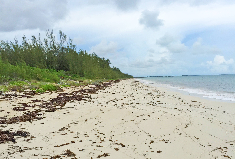 Additional photo for property listing at Lot 7,Block 14, Section 3 Bahama Palm Shores Bahama Palm Shores, Abaco Bahamas