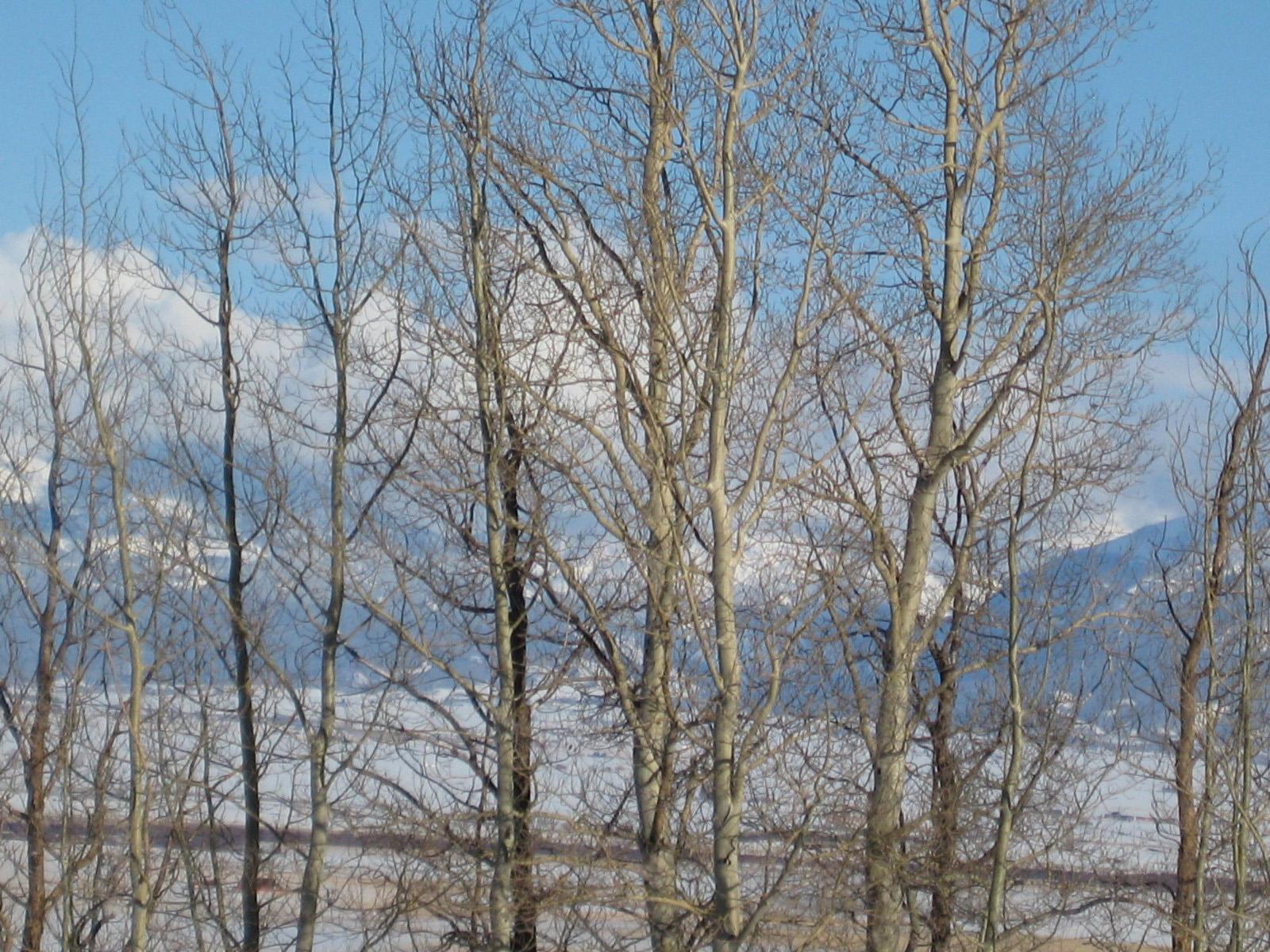 Terrain pour l Vente à Sportsman's Paradise 1318 N 4525 East Ashton, Idaho 83420 États-Unis