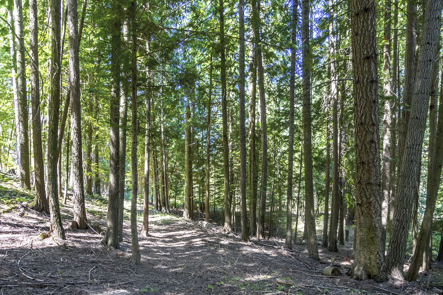 Land for Sale at Majestic Forest & Creek Frontage Lot 9 Sailor Lane Priest River, Idaho 83856 United States