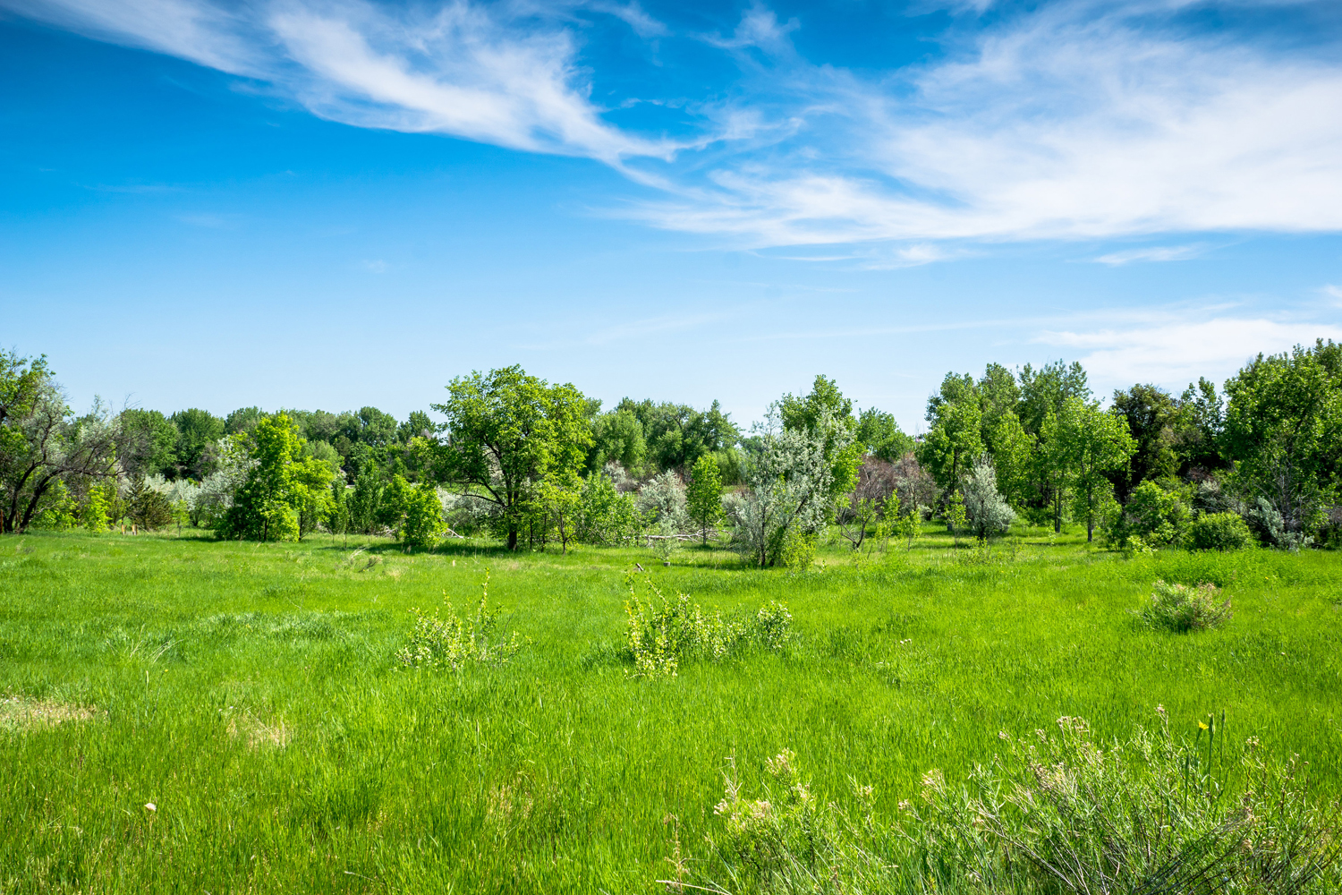 Additional photo for property listing at Greenwood Village's Most Admired Horse Property 5550 S Steele St Greenwood Village, Colorado 80121 United States