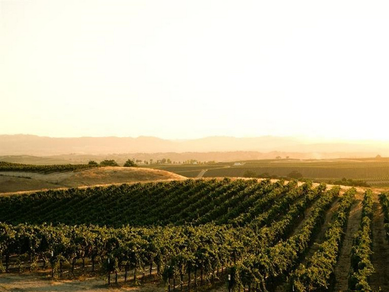 Land for Sale at Premium Paso Robles AVA Vineyard San Miguel, California, 93451 United States