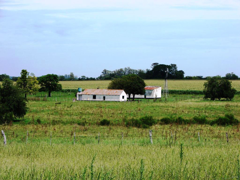 Property For Sale at Nice field of livestock farming