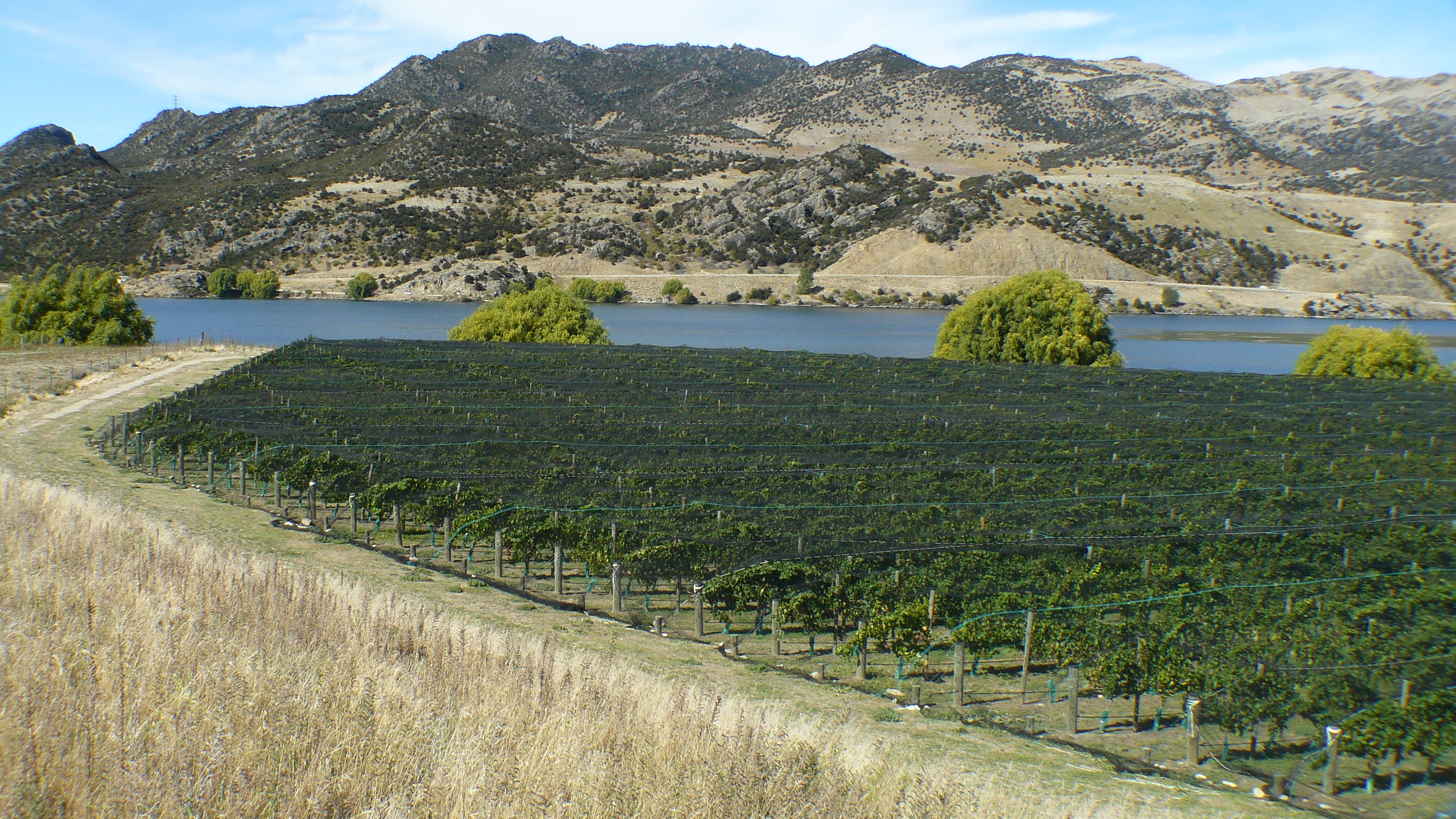 sales property at Amisfield Vineyard, Central Otago
