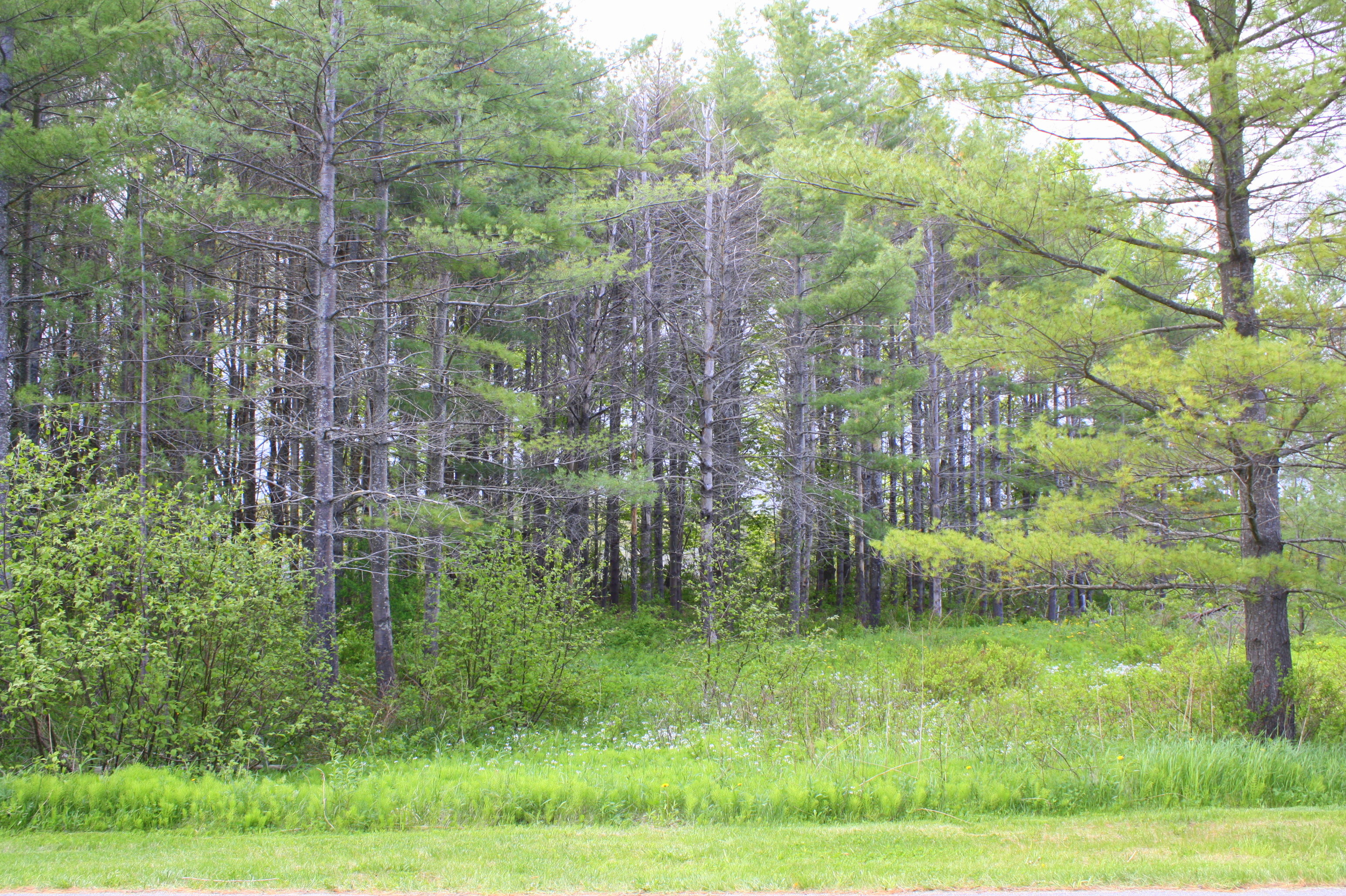 Land for Sale at 13 Clam Cove 13 Clam Cove Drive Rockport, Maine, 04856 United States