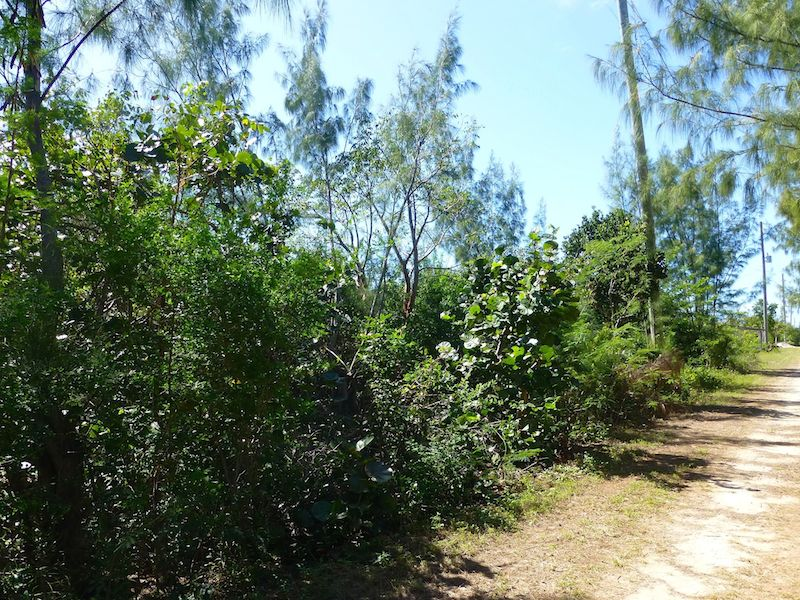 Additional photo for property listing at Tranquil Rainbow Bay Lot Priced to Sell Rainbow Bay, Eleuthera Bahamas