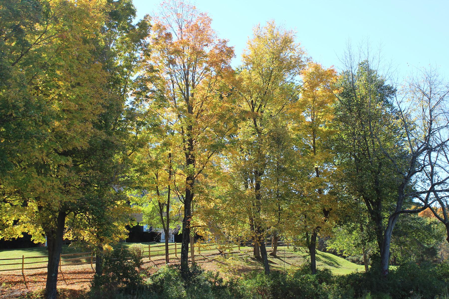 Vivienda unifamiliar por un Venta en North Chatham Countryside Colonial 595 County Route 17 Chatham, Nueva York 12132 Estados Unidos