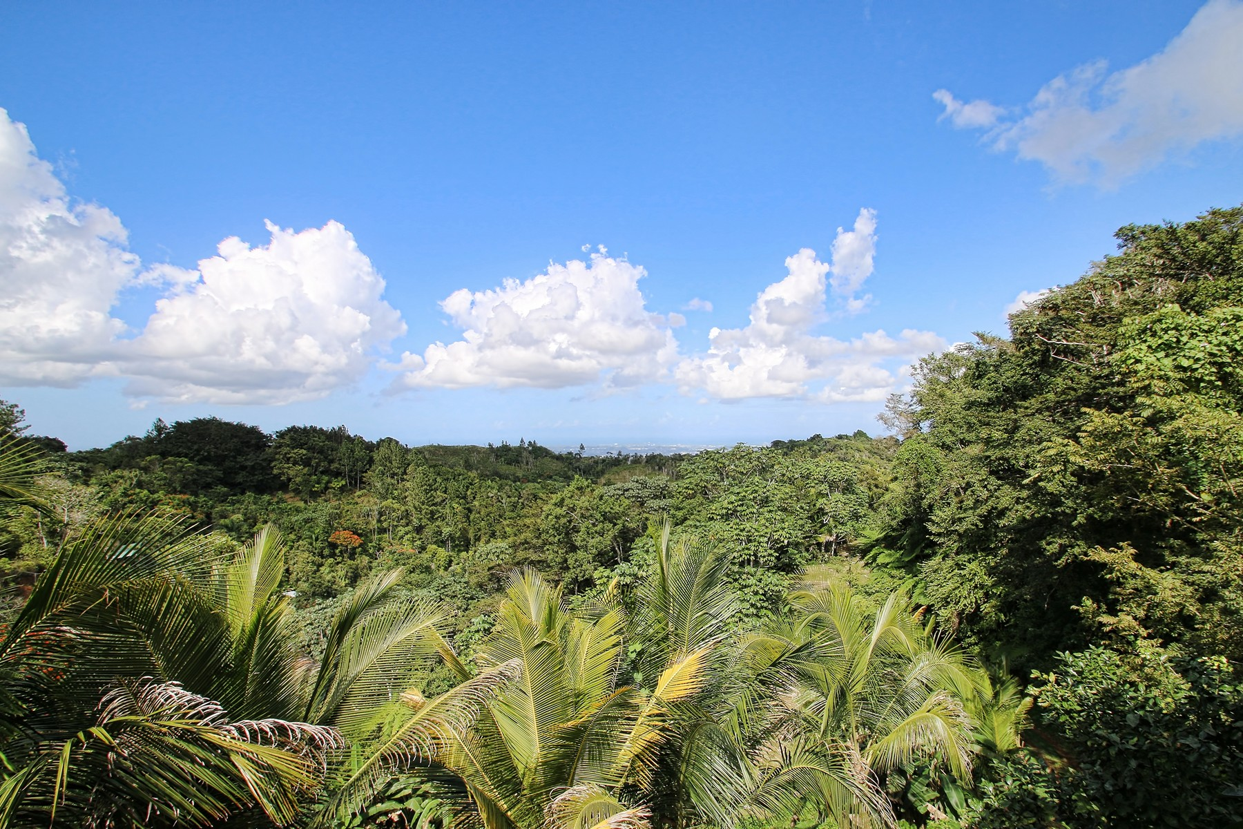 Additional photo for property listing at Hilltop Farm Hacienda Carpediem Carr 879, KM 23 Bayamon, Puerto Rico 00956 Puerto Rico