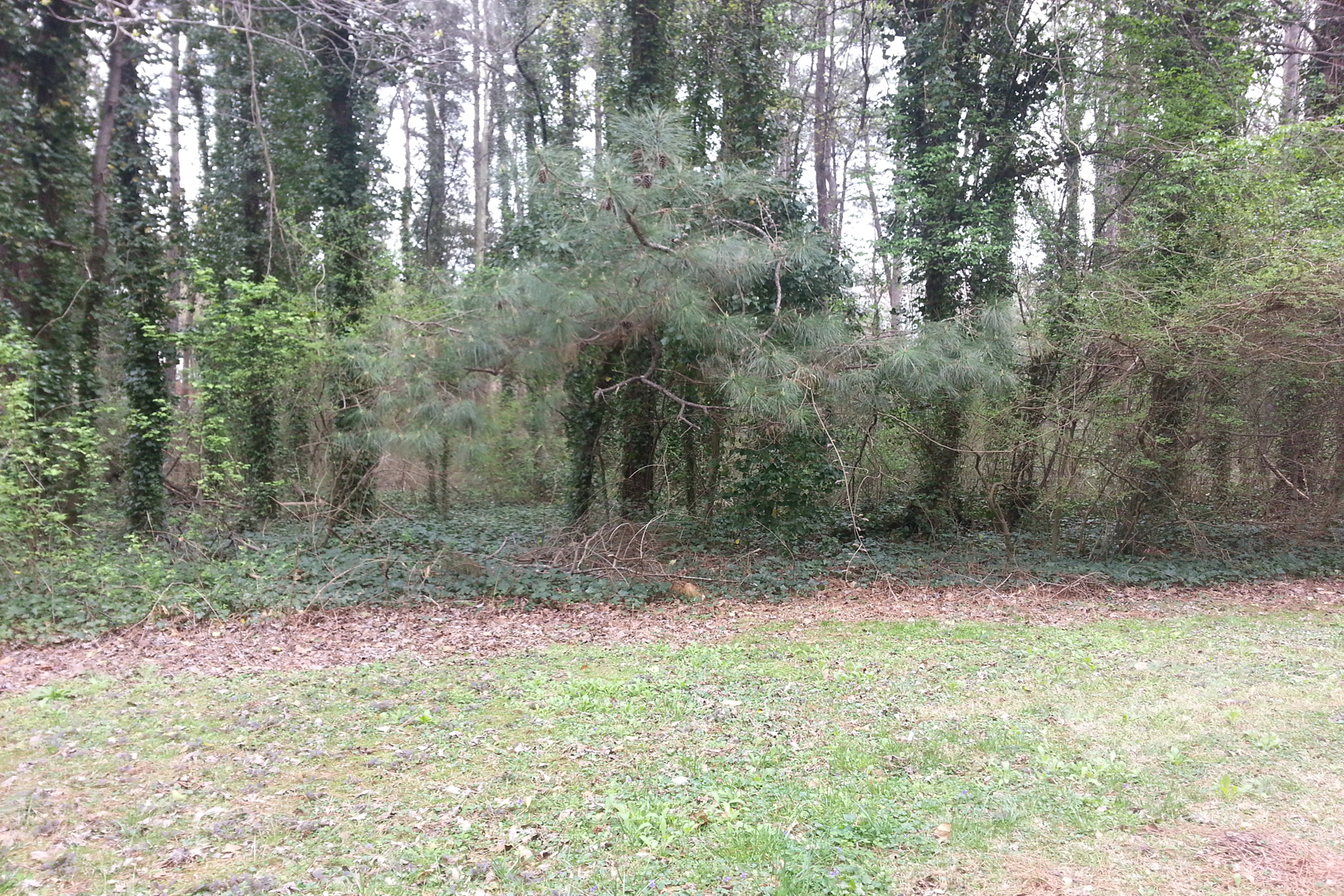 Additional photo for property listing at Lot 6 Cambridge Street  Snellville, Georgia 30078 Hoa Kỳ