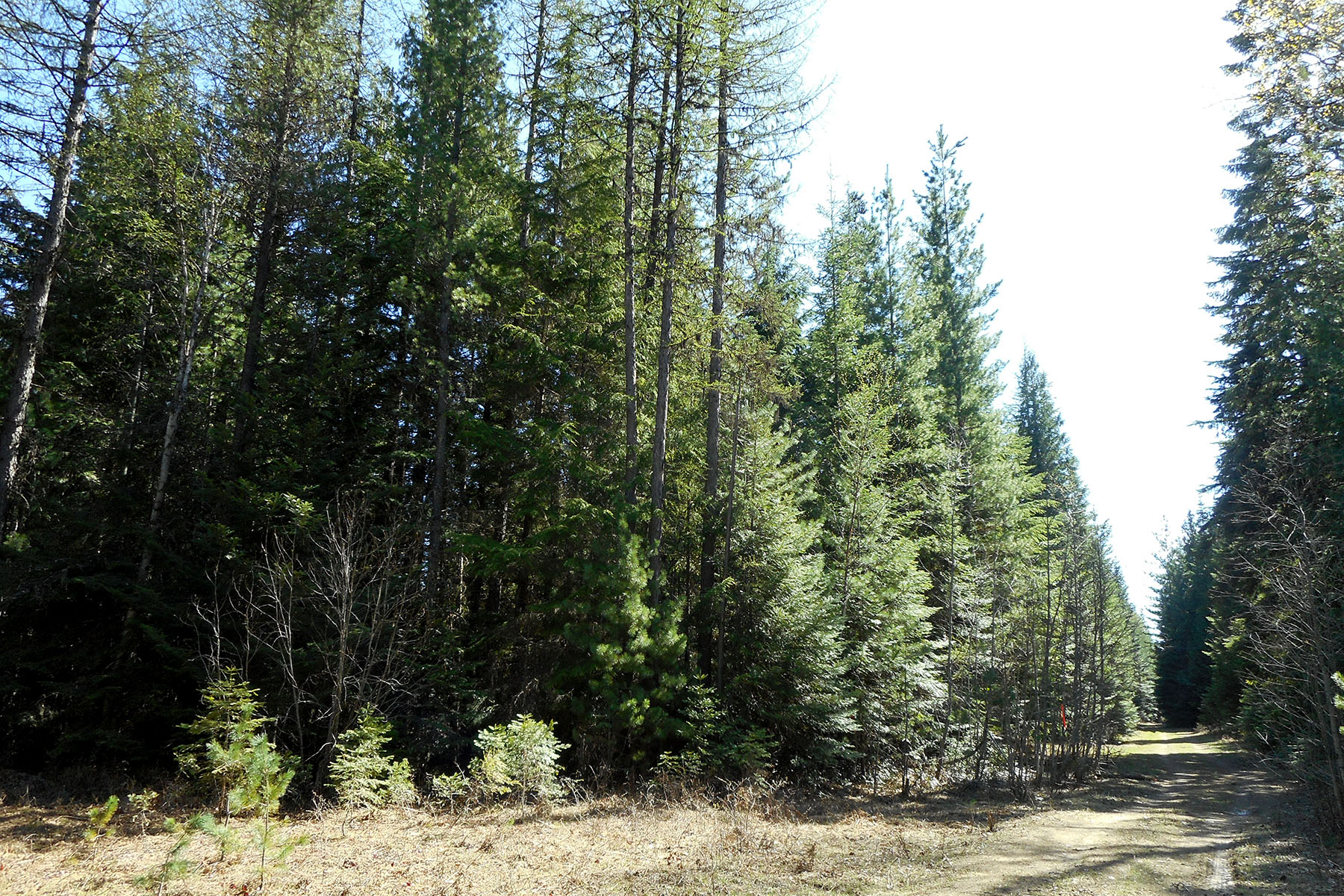 Land for Sale at Private wooded 5 acre parcel NNA 5 acre Off C Street Sandpoint, Idaho, 83864 United States