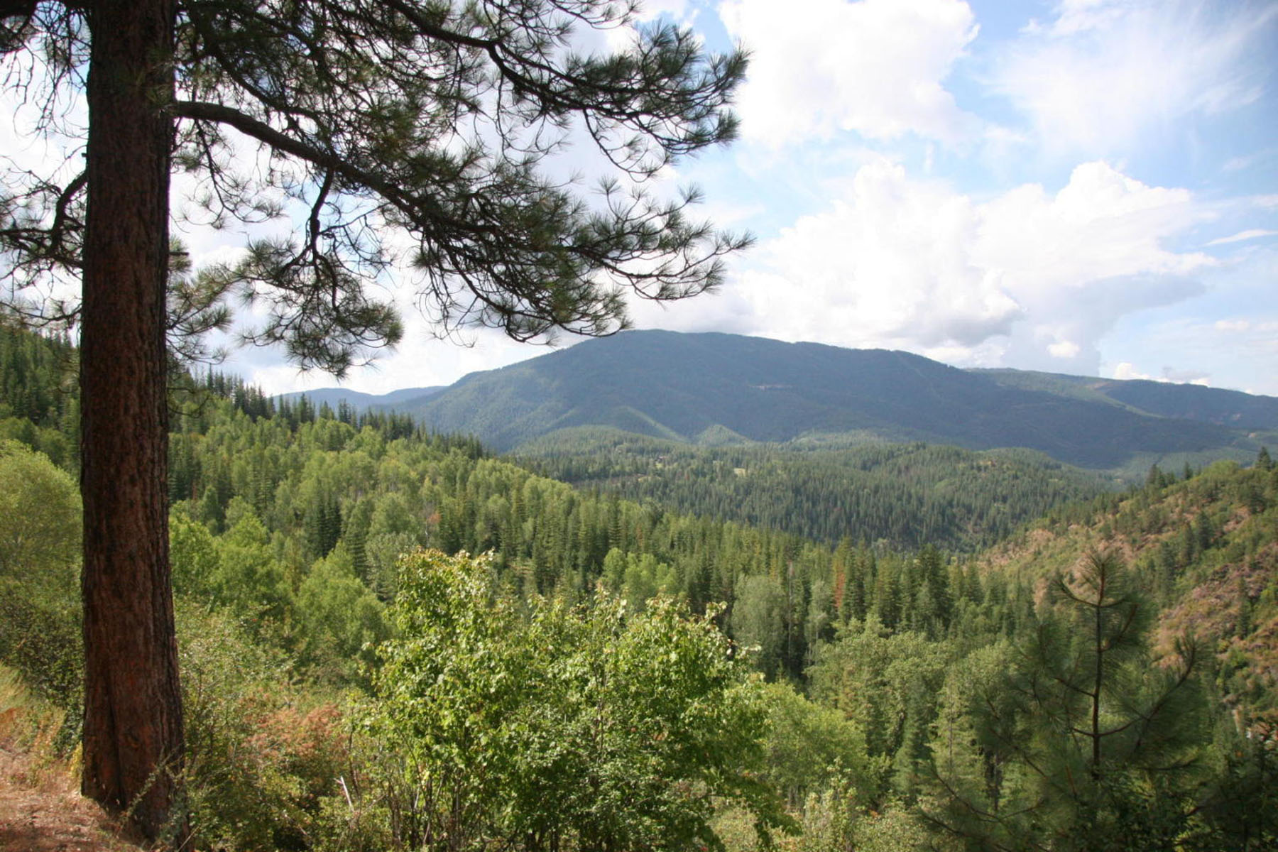 Terreno por un Venta en 149 acres of some of the best land in the Silver Valley NNA Moon Gulch Rd 149 acres Smelterville, Idaho, 83868 Estados Unidos