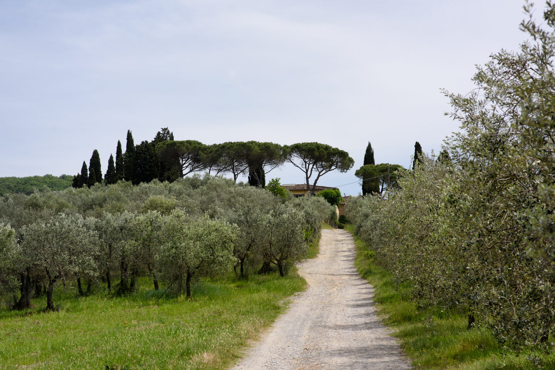 Additional photo for property listing at Charming winery in the heart of Chianti Greve in Chianti Greve In Chianti, Florence 50022 Italie