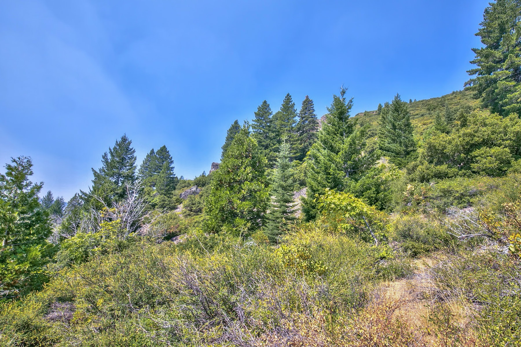 Additional photo for property listing at Sierra Buttes Road  Sierra City, California 96125 United States