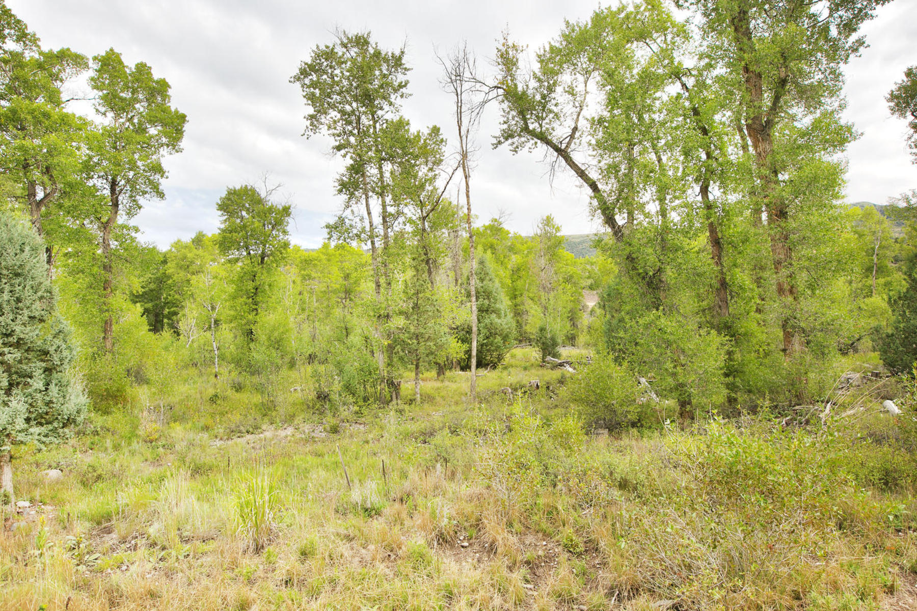 Property For Sale at Delightful wooded 5 acre parcel on year round creed w/year round access!