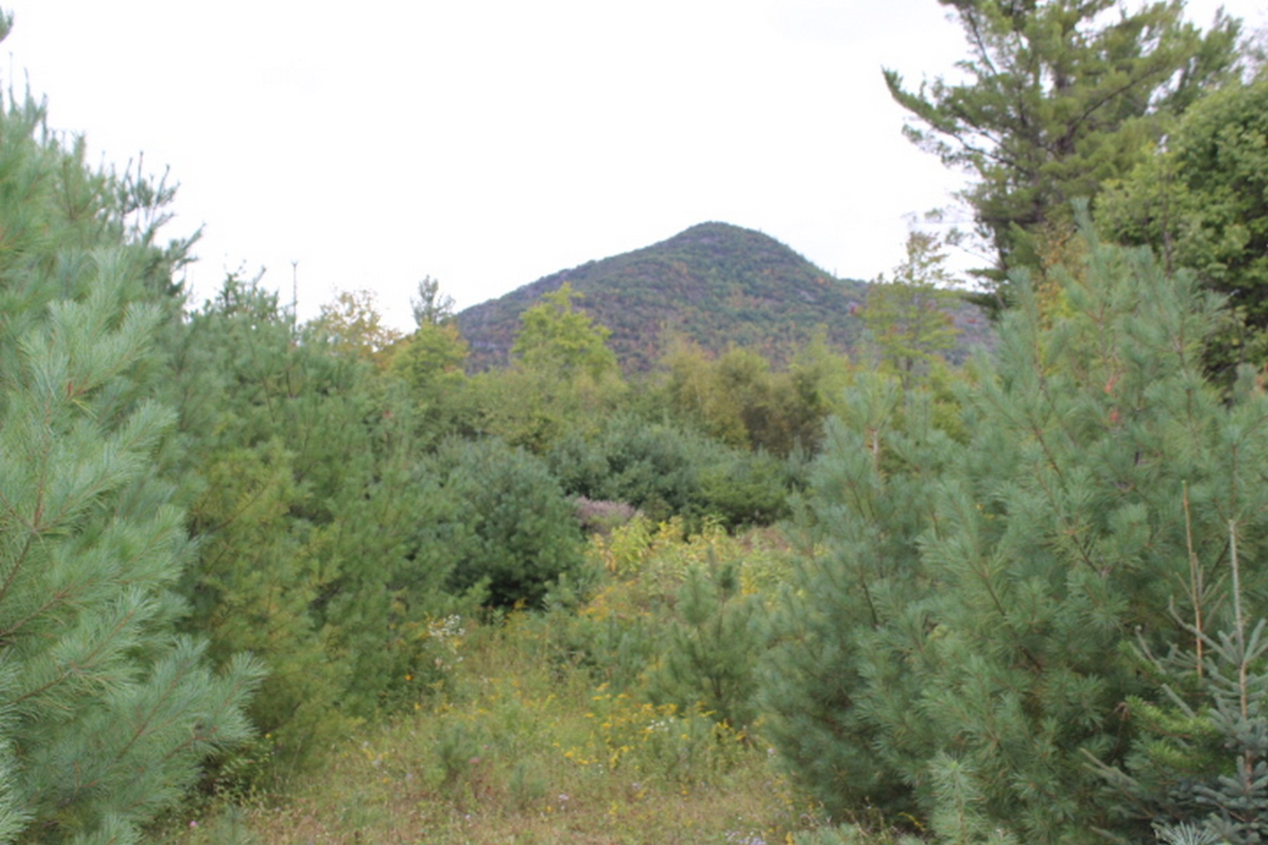 Land for Sale at 55 Acres in the High Peaks Region 6551 Route 86 Jay, New York 12941 United States
