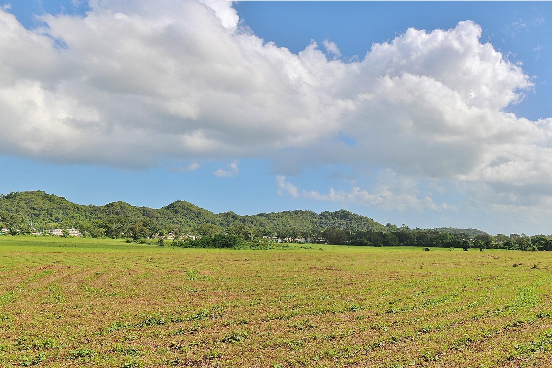 Land for Sale at 143 Acres on Route 695 Dorado Beach Carr 695 KM1 HM3.2 Barrio Higuillar Dorado, 00646 Puerto Rico