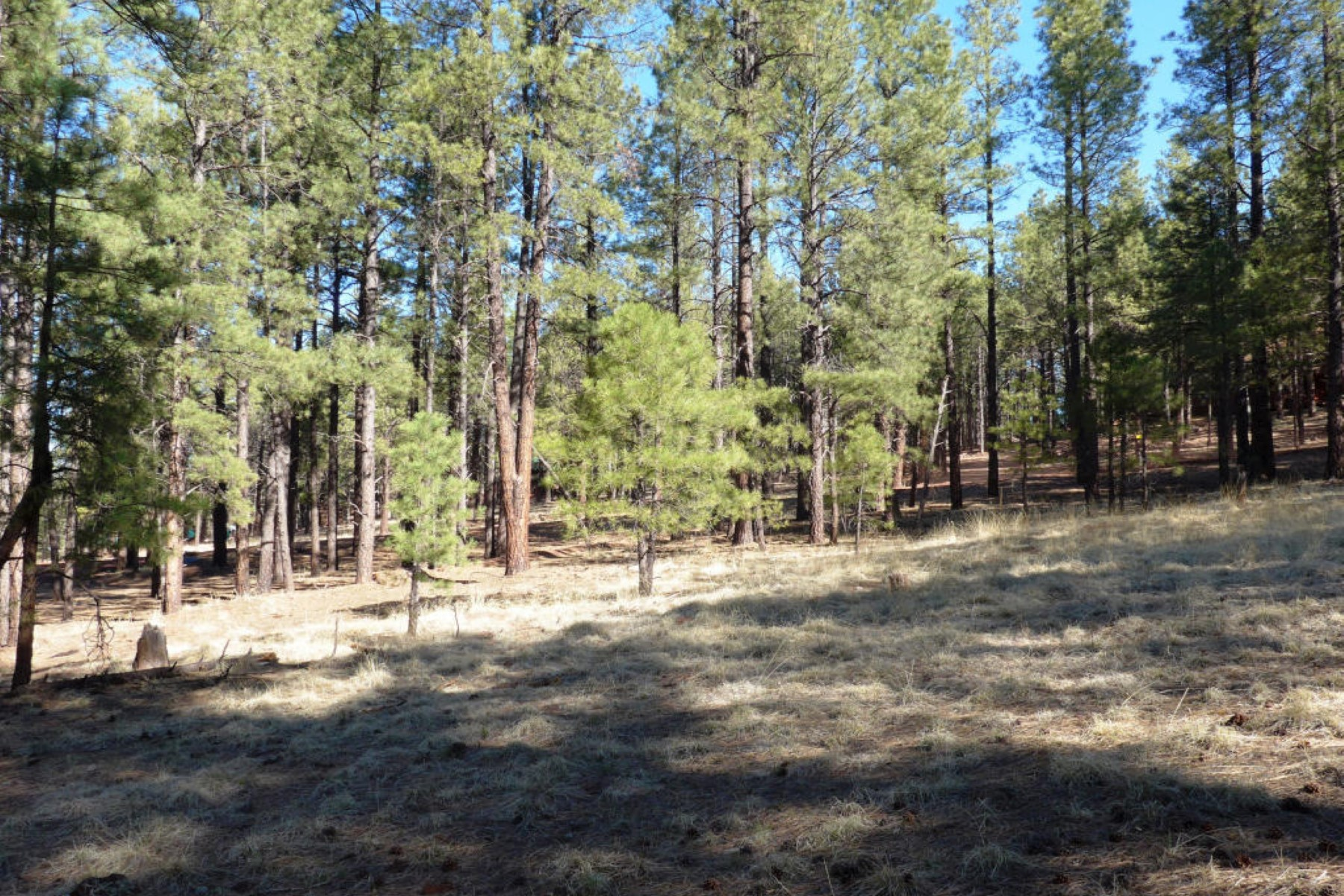 sales property at One Acre of Old Growth Pine Trees that backs the National Forest.