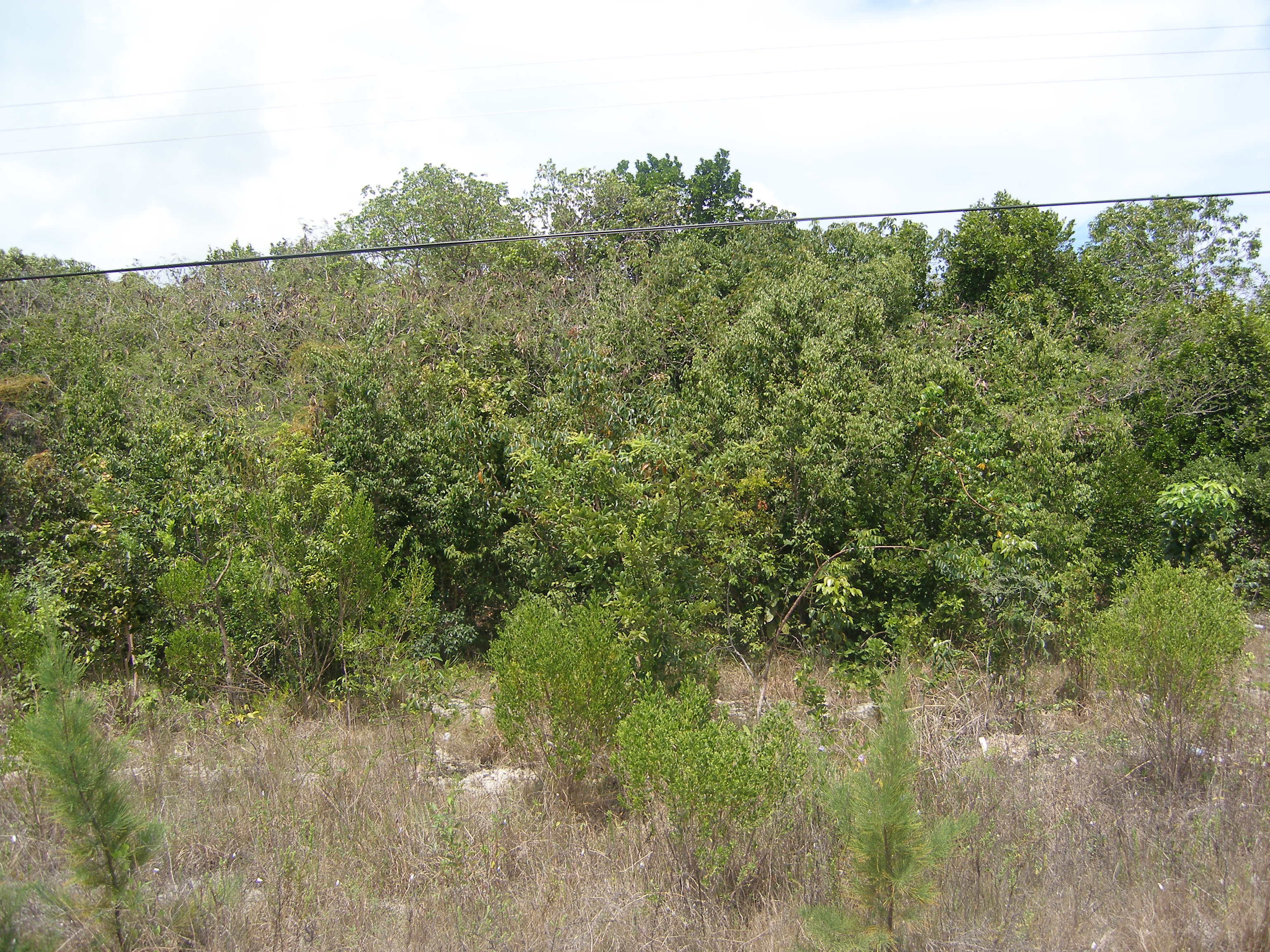 Land for Sale at Lot 84 Rock Sound, Eleuthera Bahamas