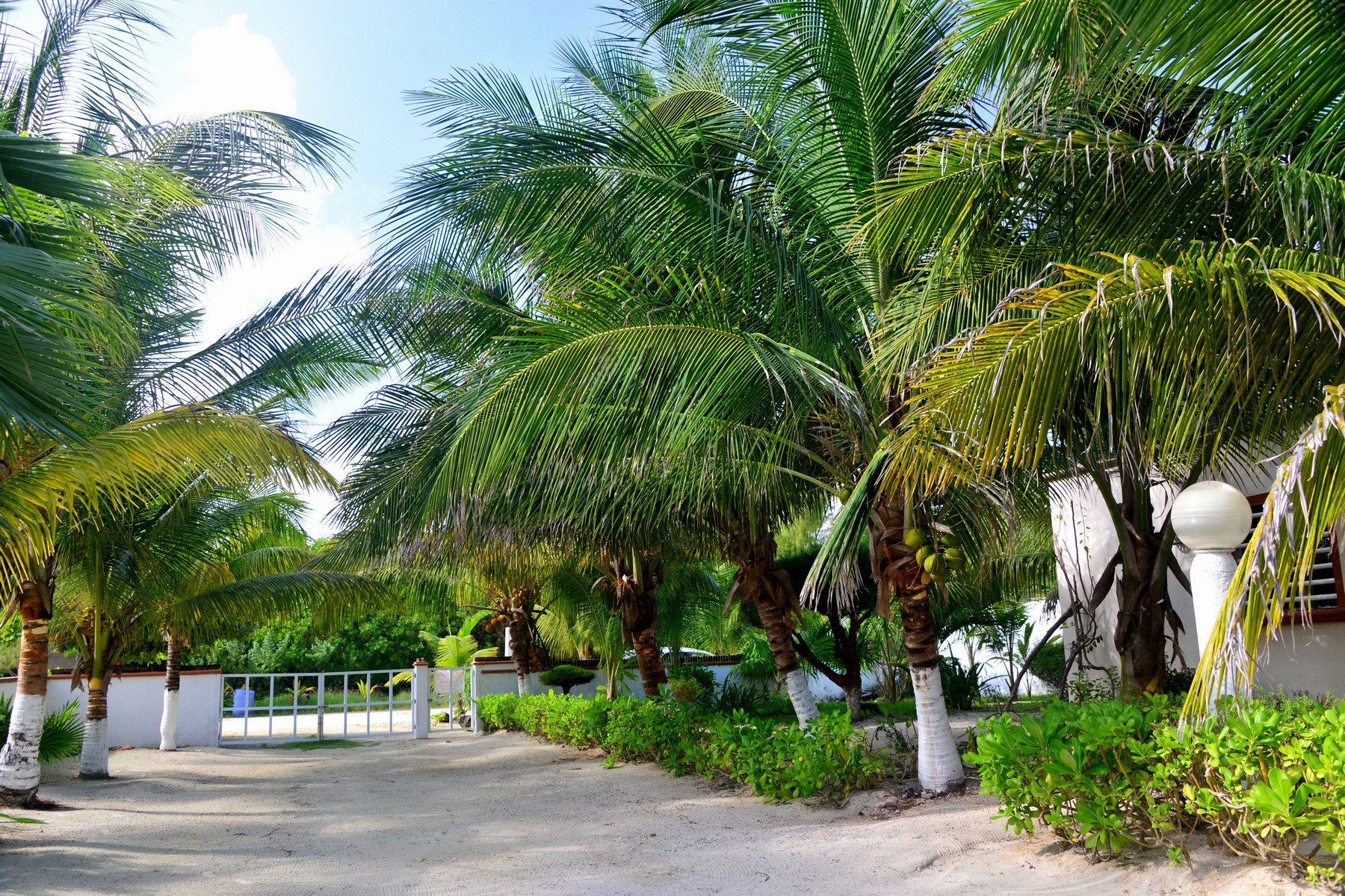 Property For Sale at PUERTO MORELOS BEACHFRONT LOT