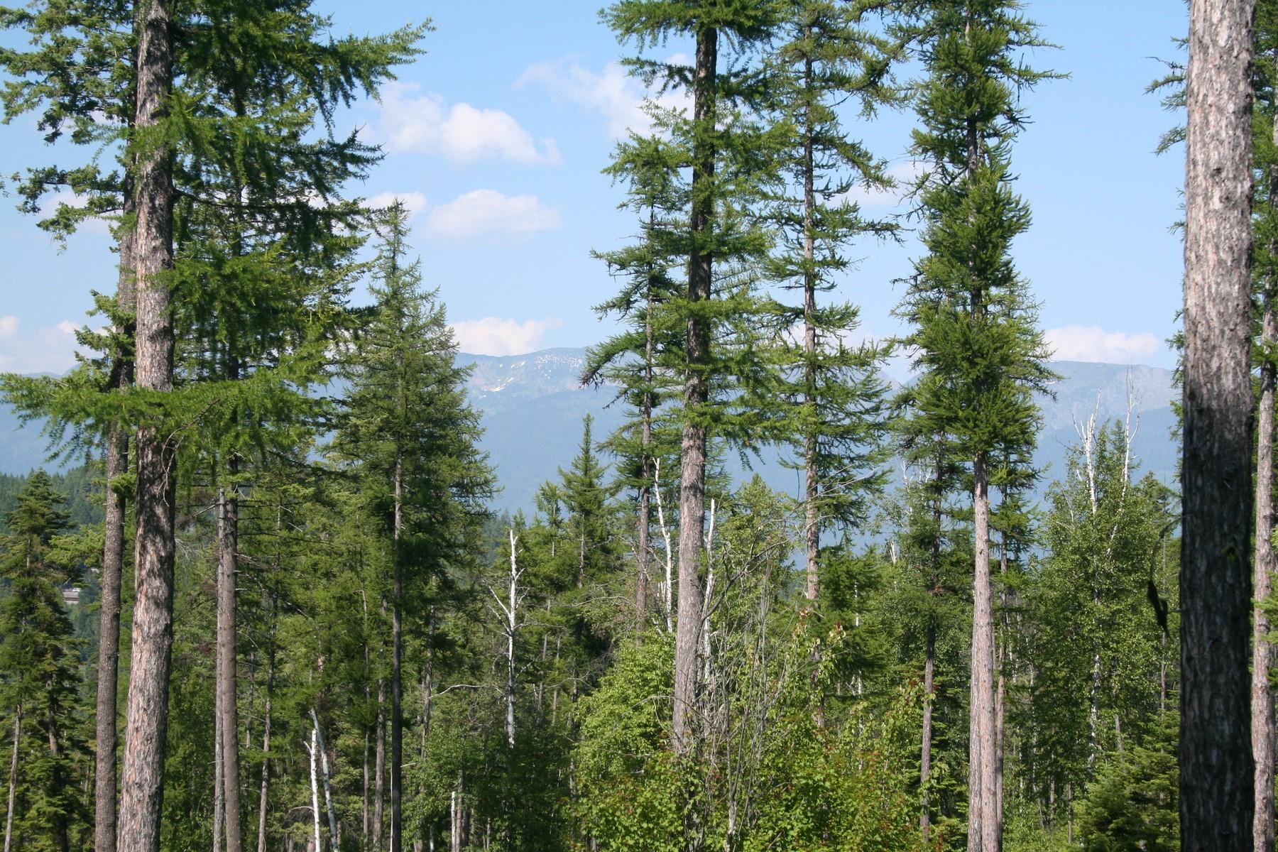 Terreno per Vendita alle ore Saddlehorn 205 Pinto Trail Bigfork, Montana, 59911 Stati Uniti