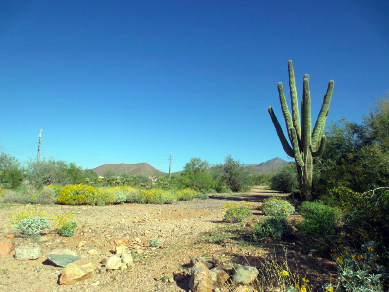 Land for Sale at One of Four Easy-Build Lots In The Sought-After Shea Corridor 13102 E Cochise Rd #3 Scottsdale, Arizona 85259 United States