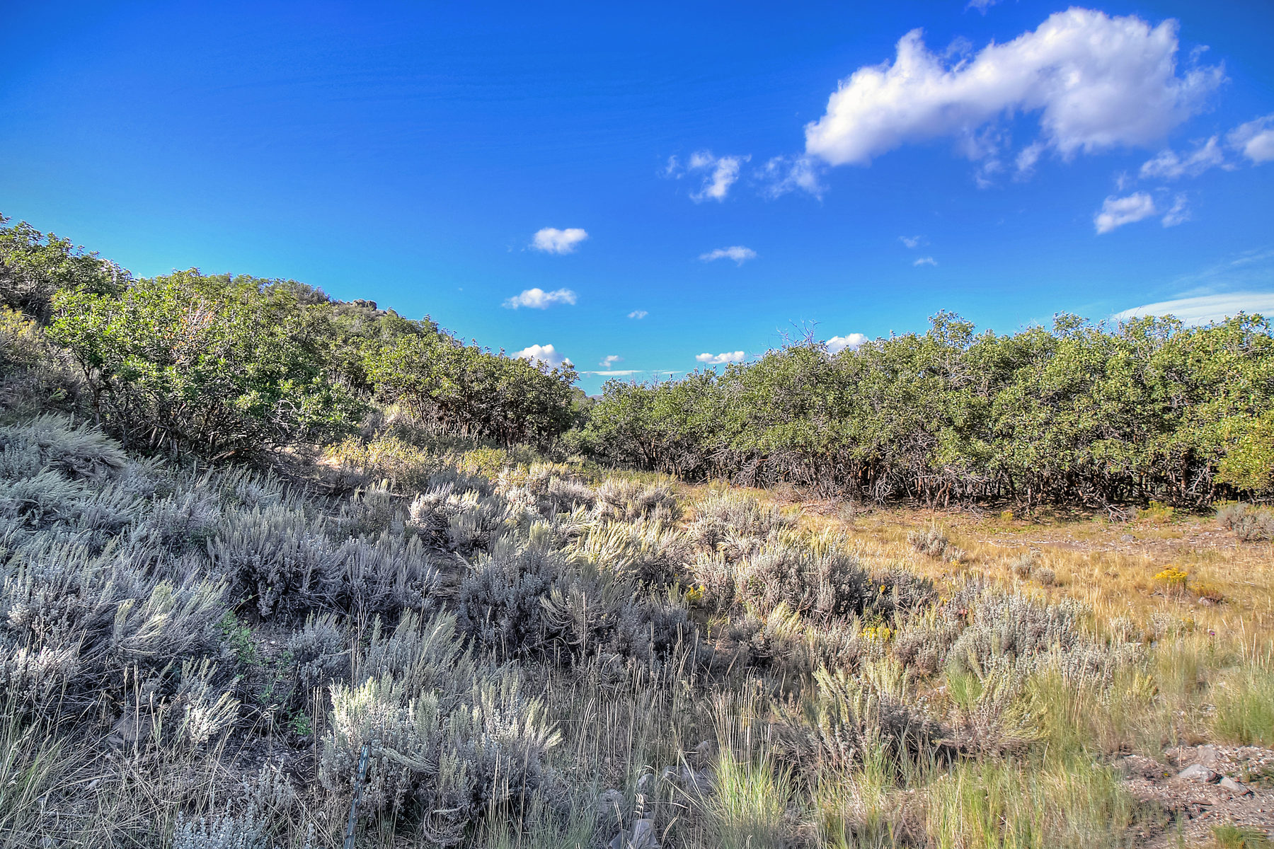 sales property at A Lush Oak Covered Homesite