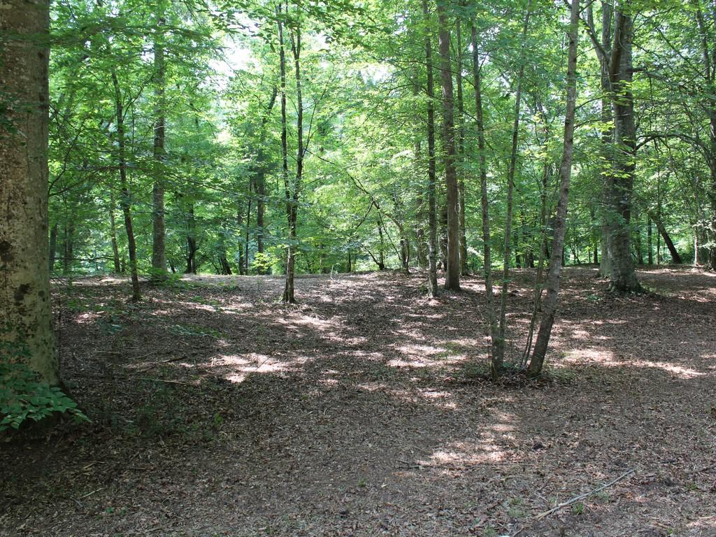 Land for Sale at 69 Ash Creek Lane Rutherfordton, North Carolina, 28139 United States